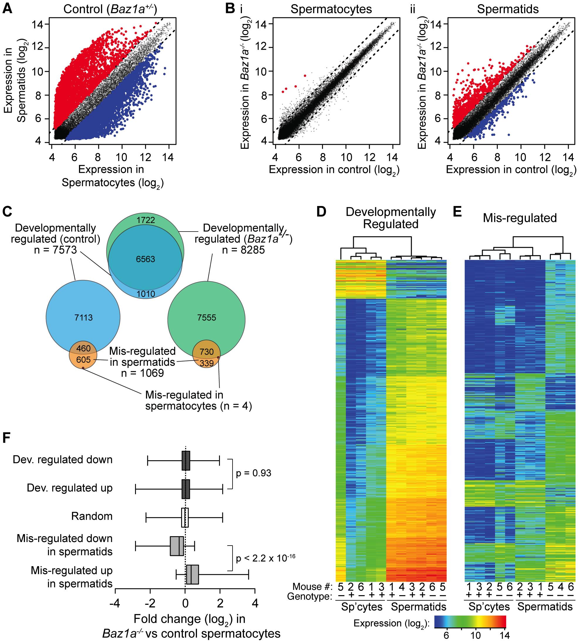Wide-spread transcriptional perturbations in <i>Baz1a</i>-deficient spermatids.