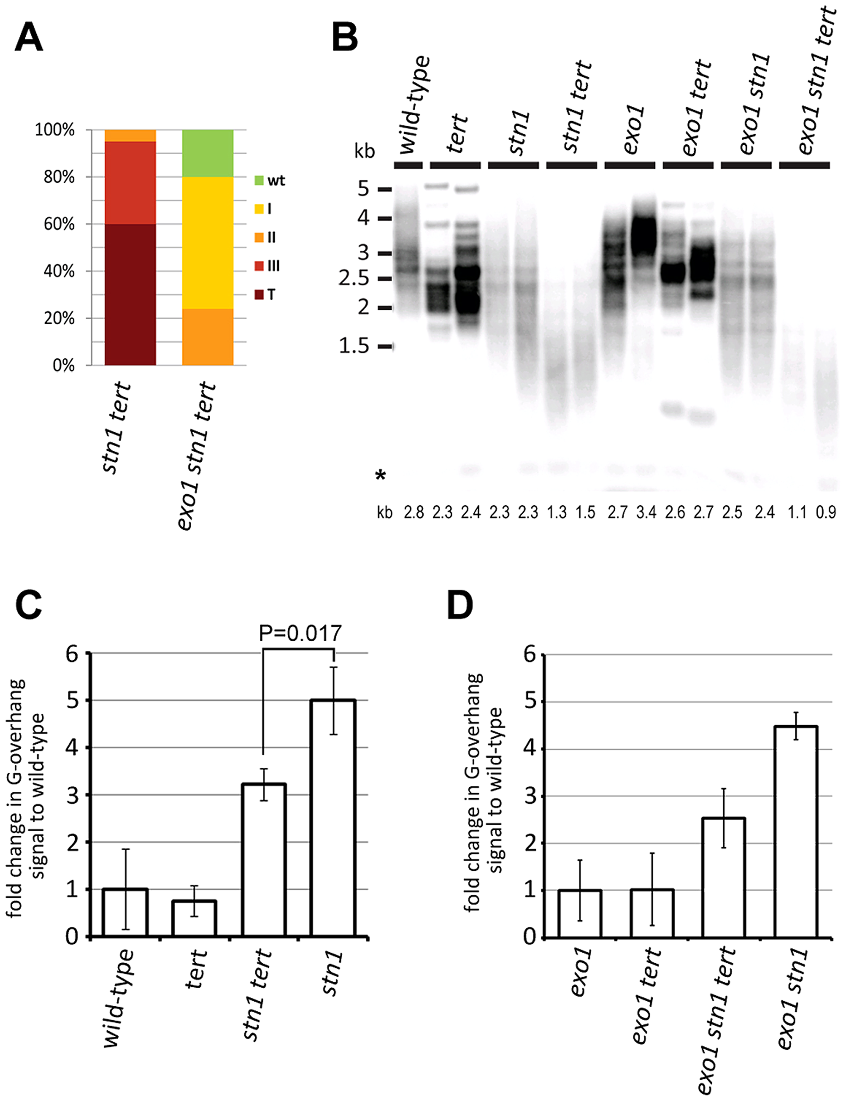 STN1 acts in the C-strand fill-in synthesis after G-strand extension by telomerase.