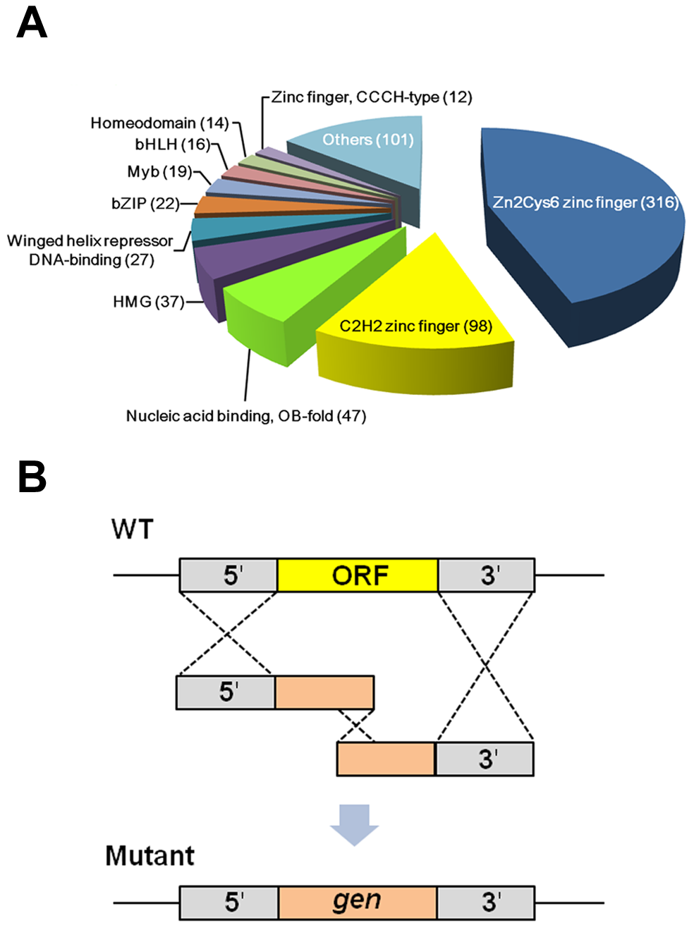 Classification and deletion strategy of putative transcription factors (TFs) in <i>Fusarium graminearum</i>.