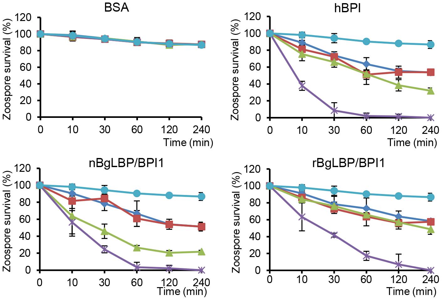 BgLBP/BPI1s and hBPI display anti-oomycete activity against <i>P. parasitica</i> zoospores.