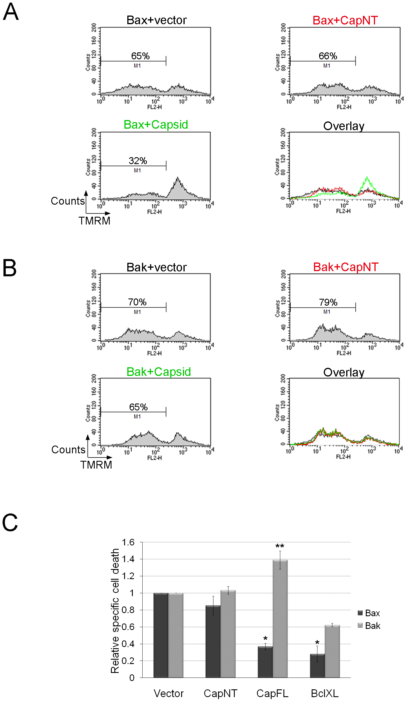 Capsid expression protects against Bax- but not Bak-induced apoptosis.