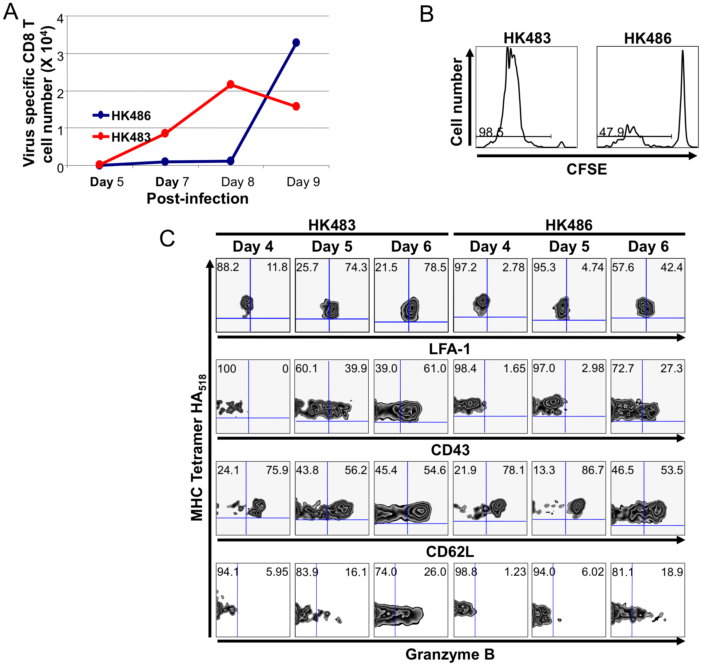 CD8 T cell responses in the lung airways of mice infected with H5N1 viruses.