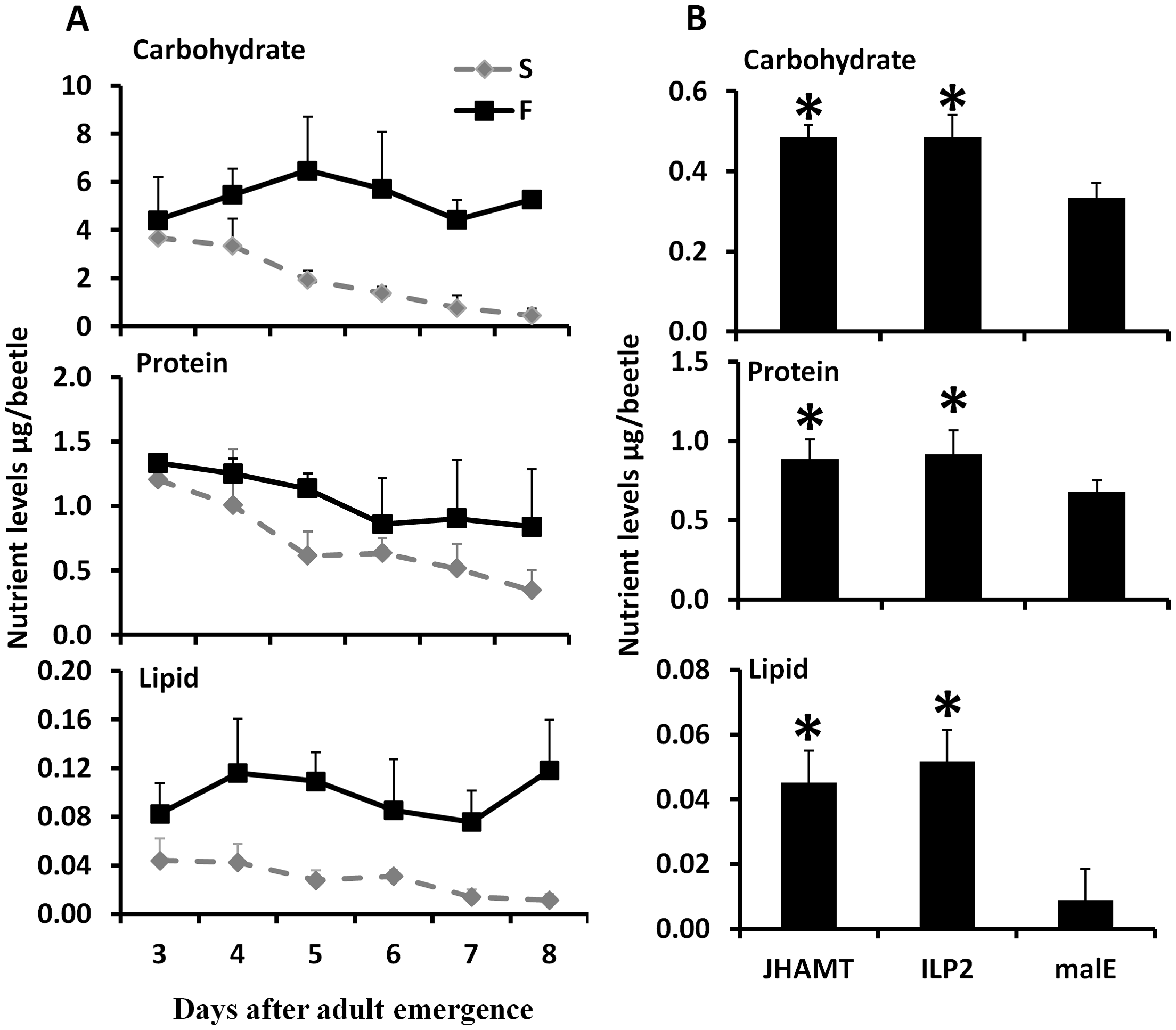 JH and ILP2 regulate carbohydrate, protein, and lipid metabolism during starvation.