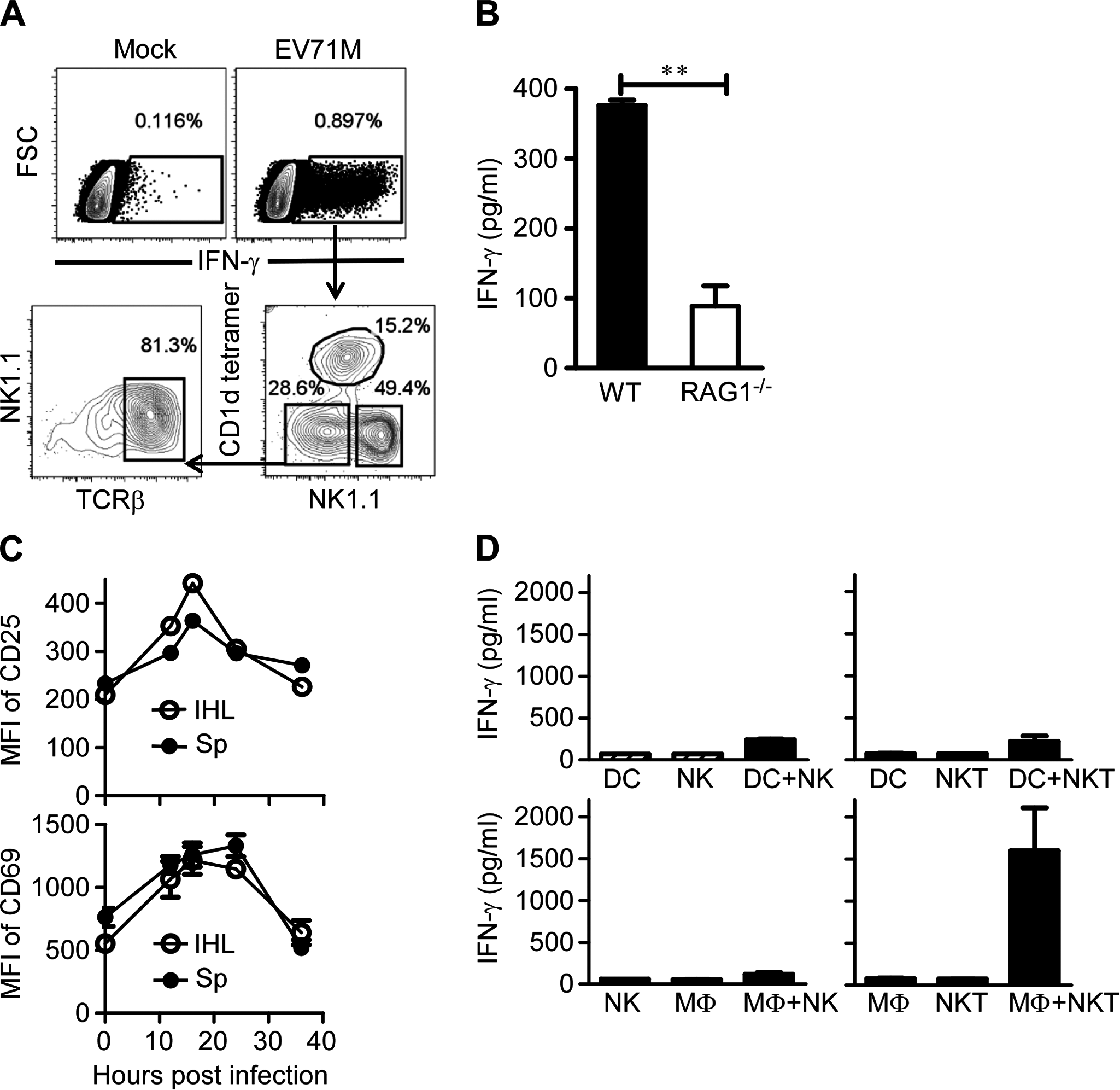EV71 infection activates iNKT cells through triggering macrophages.