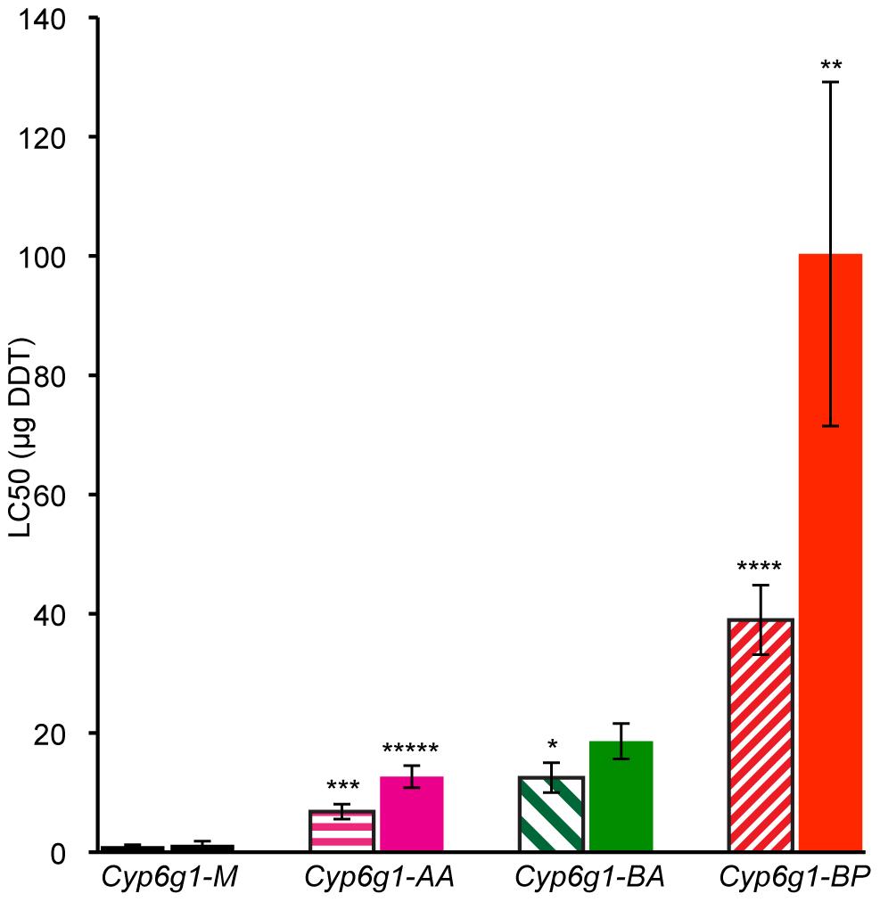 DDT resistance correlates with <i>Cyp6g1</i> allelic class.
