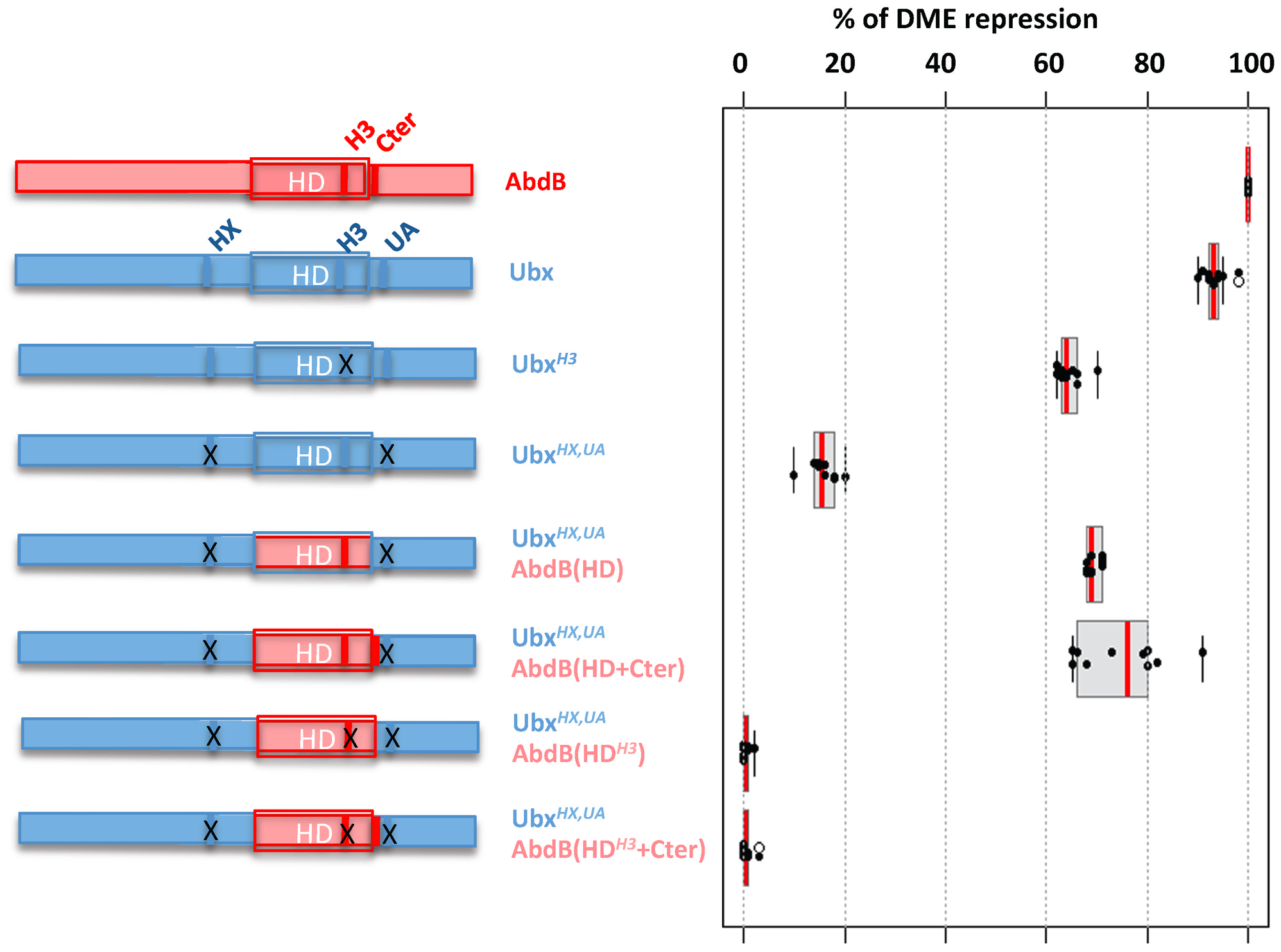 Requirement of protein domains in AbdB/Ubx chimeric proteins for DME repression.
