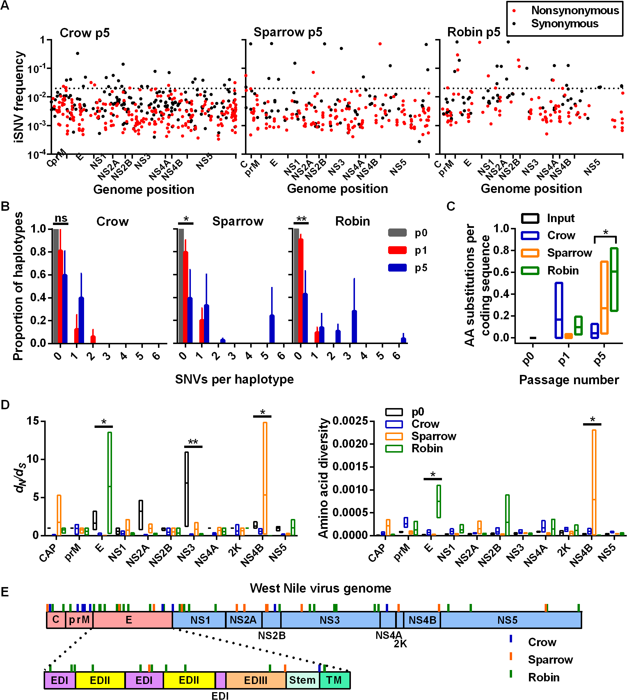 High-frequency iSNVs contribute to haplotype displacement in a bird-species dependent manner.