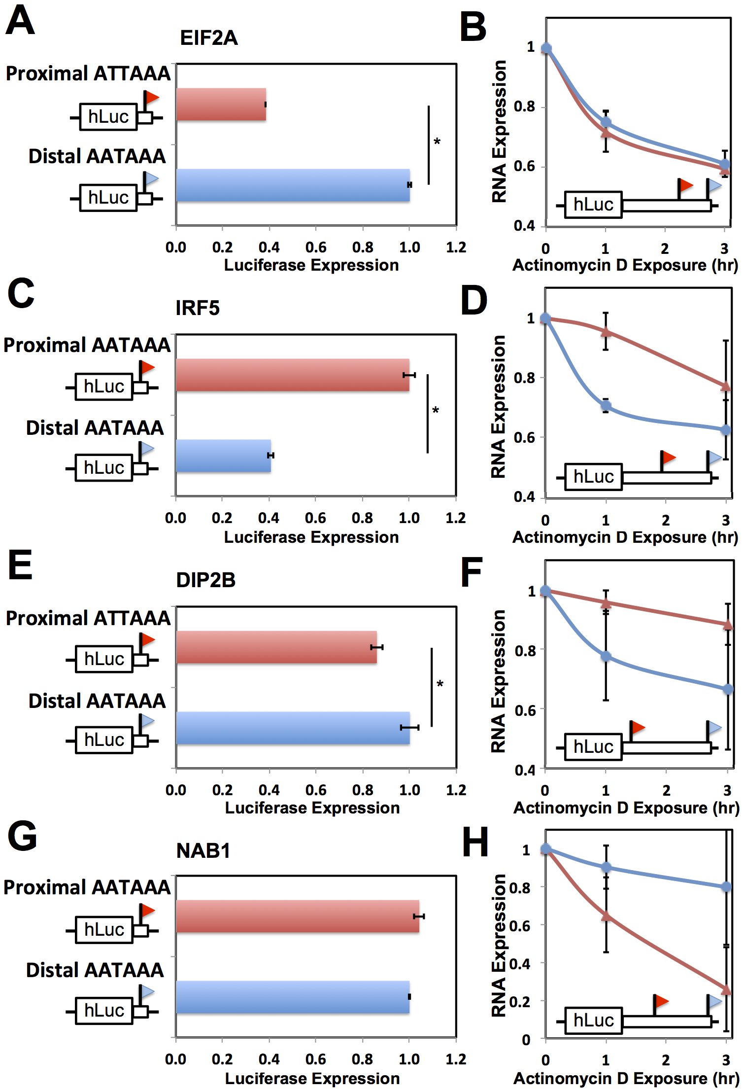 Effects of 3′ processing signals and transcript half-life on expression of short and long transcripts.