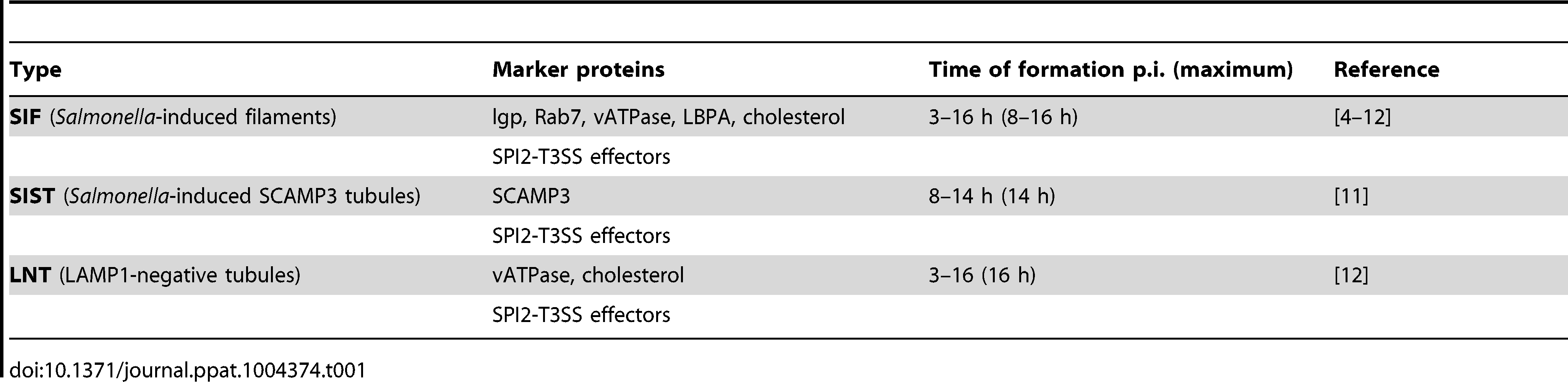 Features of <i>Salmonella</i>-induced tubules (SIT).