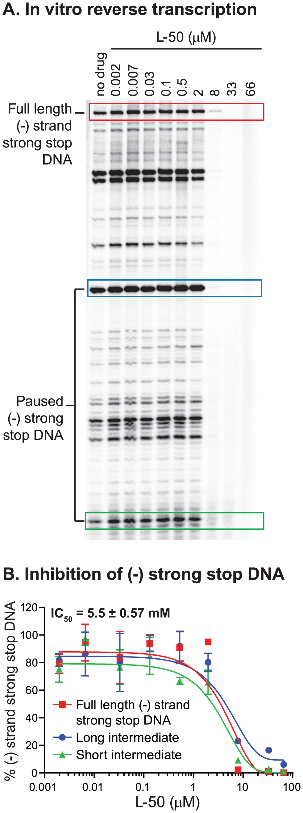 Inhibition of minus strand strong stop DNA synthesis by L50.