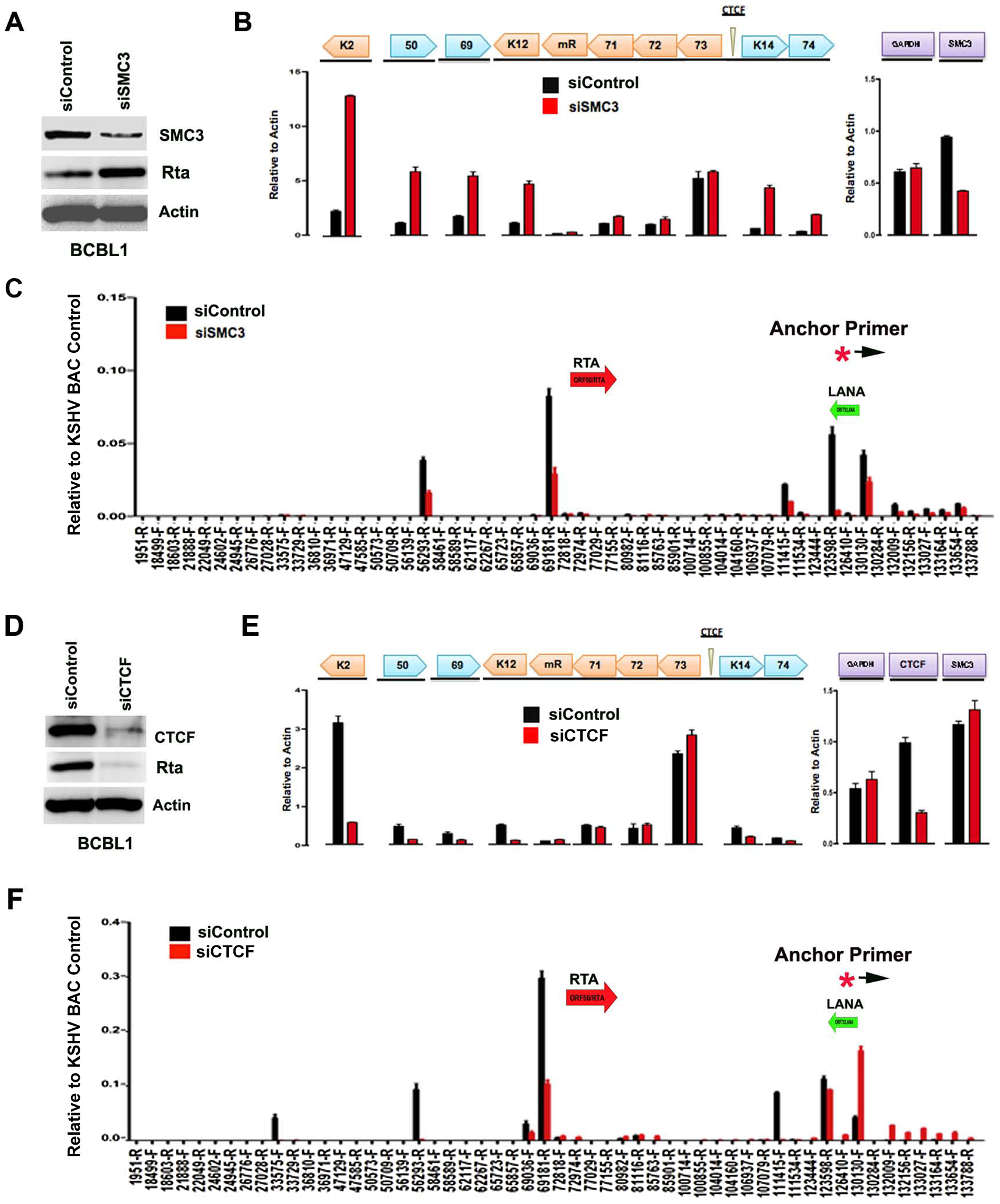 siRNA depletion of CTCF or Cohesin subunit SMC3 deregulates KSHV latent and lytic gene expression.