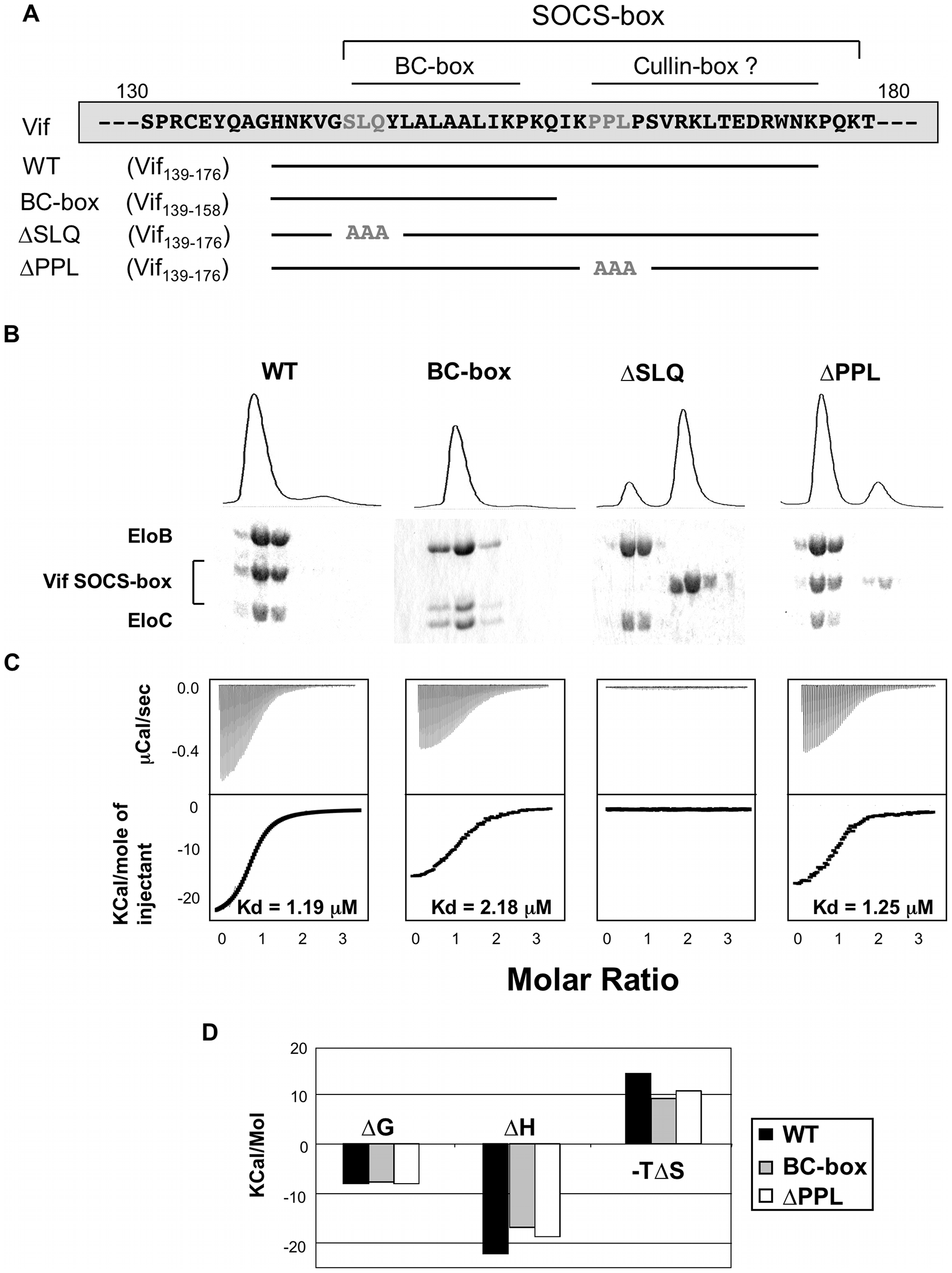 Biochemical analysis of the Vif-EloBC interaction.