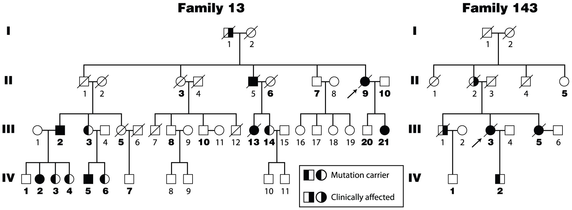 Four generation pedigrees of pulmonary fibrosis probands from Families 13 and 143 of the Vanderbilt Registry.