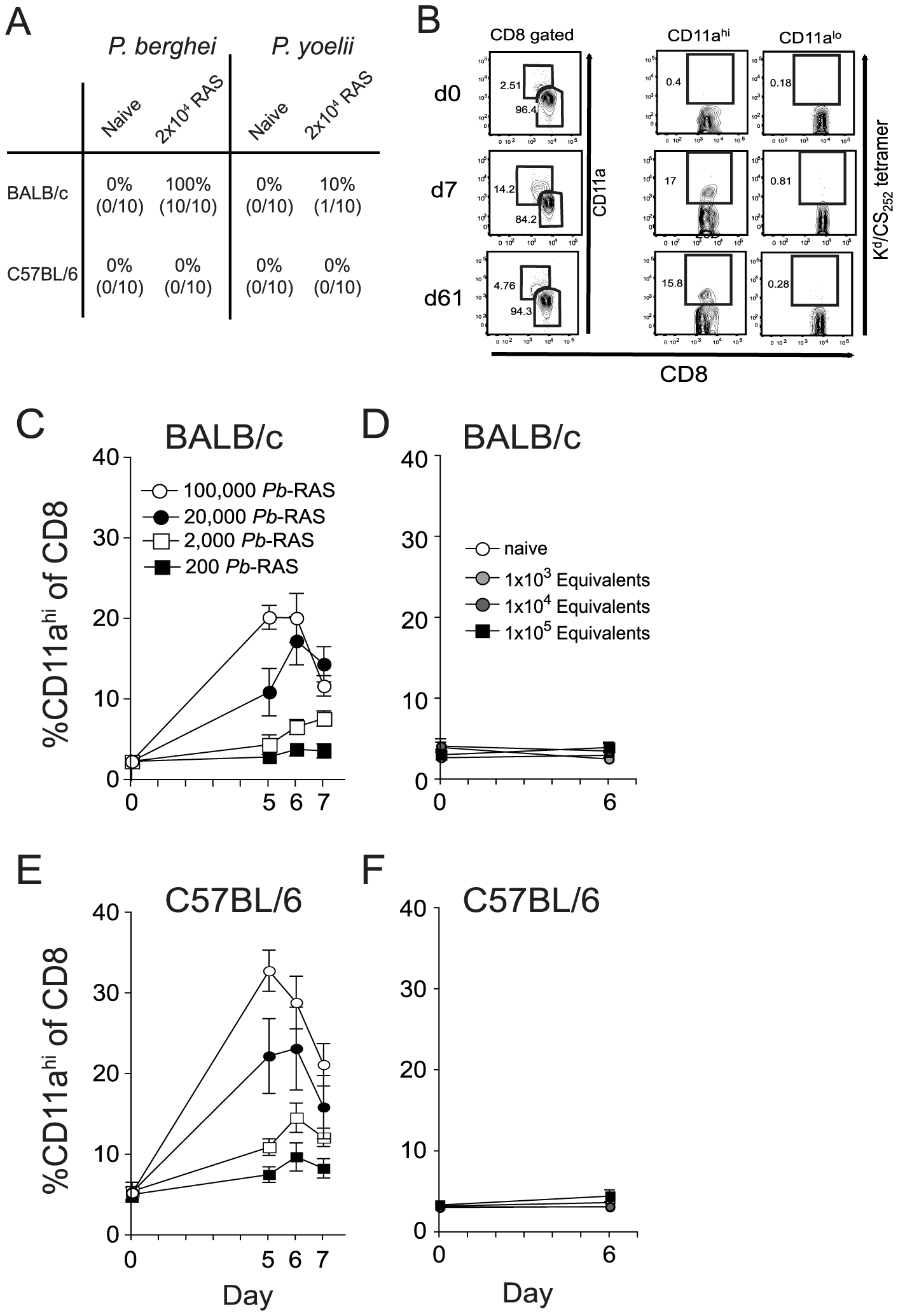 Sensitivity and specificity of the CD8α<sup>lo</sup>CD11a<sup>hi</sup> surrogate activation marker approach to identify RAS vaccination-induced CD8 T cell responses.