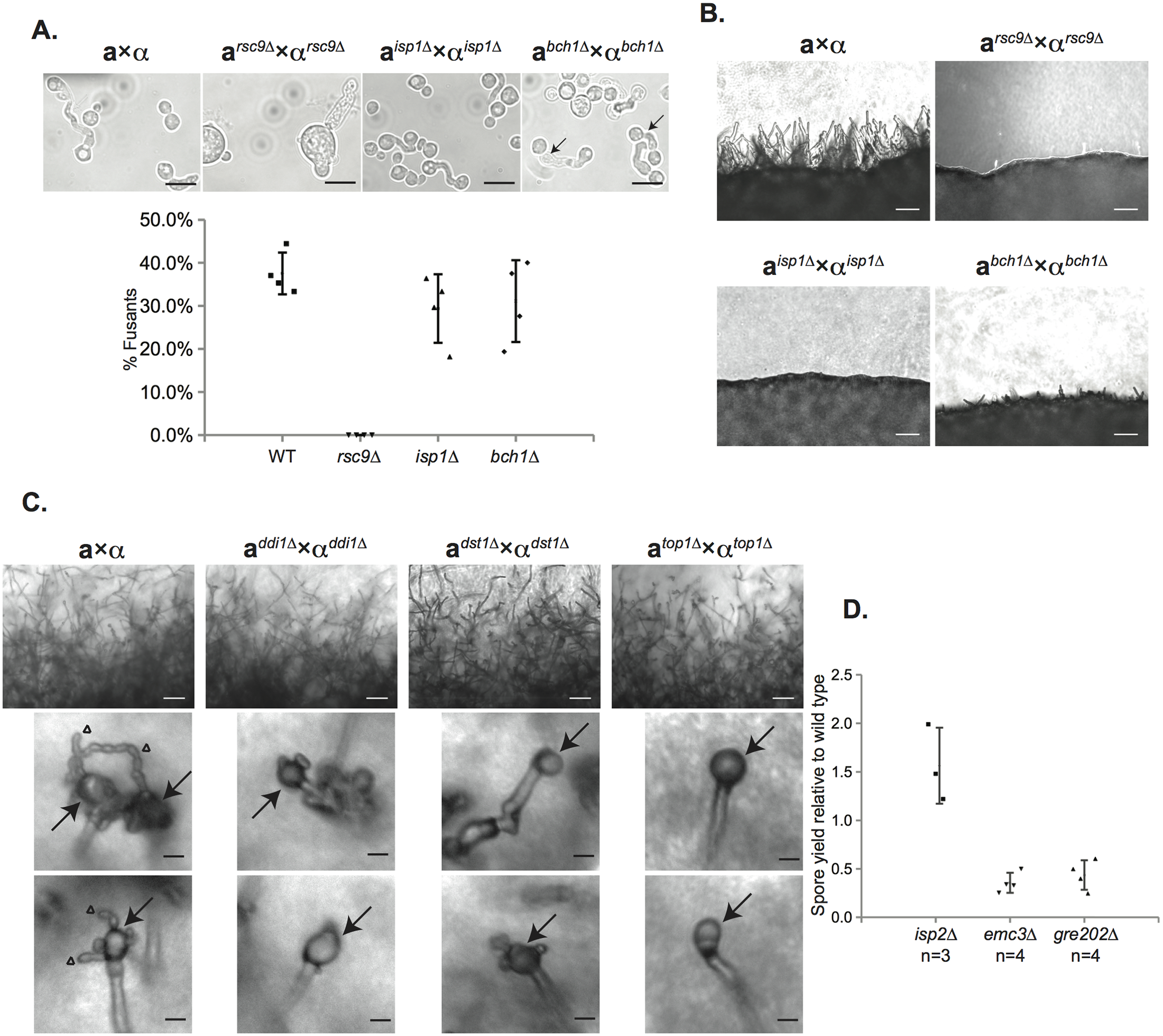 Characterization of the sexual development of deletion mutants for spore-enriched proteins.