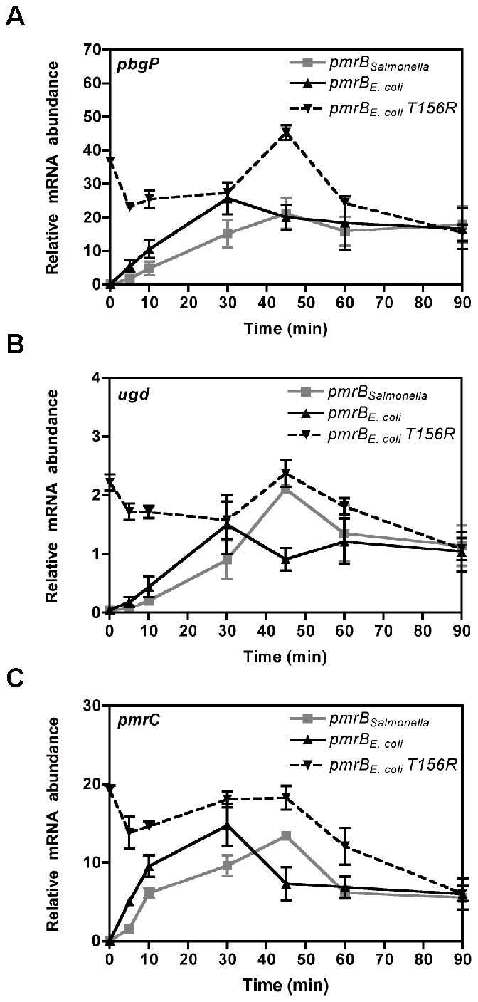 The source of <i>pmrB</i> determines activation kinetics of PmrA-controlled genes.