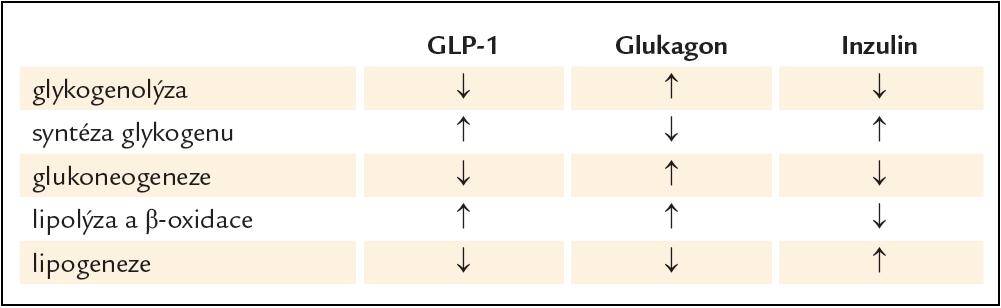 Porovnání účinku GLP-1 (a jeho štěpných produktů), glukagonu a inzulinu na jaterní metabolizmus sacharidů a lipidů.