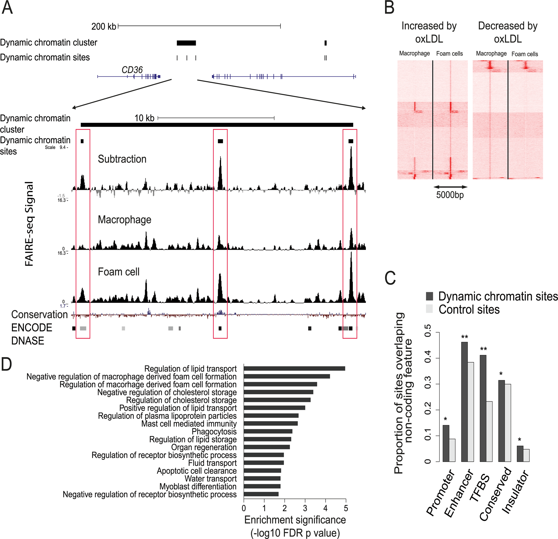 Characterization of the dynamic chromatin landscape resulting from oxLDL exposure.