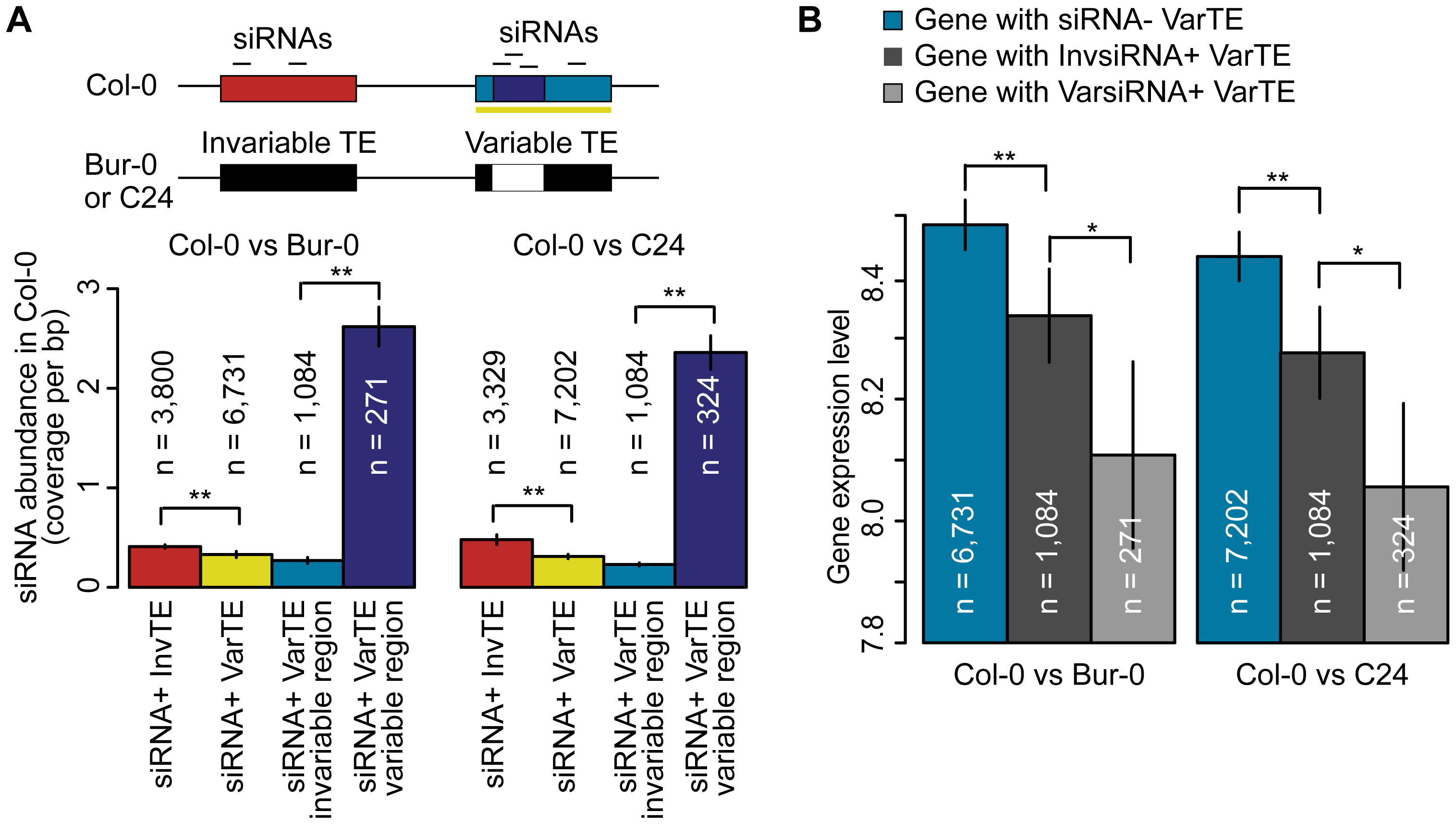 siRNA–targeting of VarTEs and the effect on proximal gene expression.