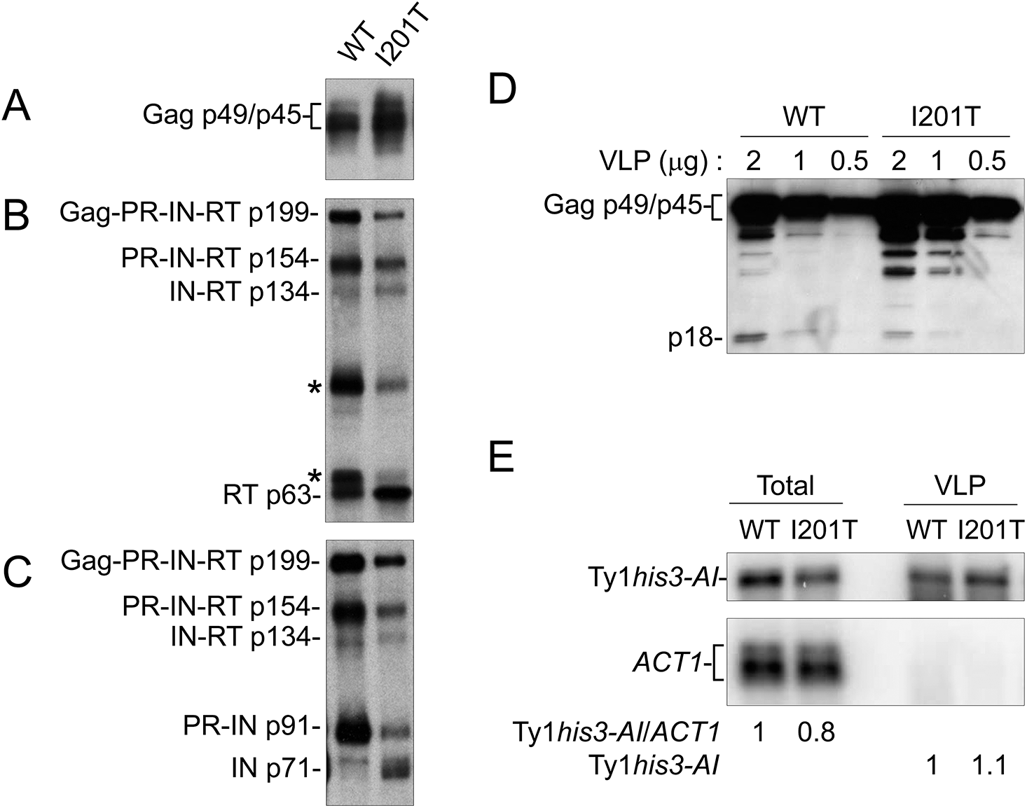 I201T CNC<sup>R</sup> VLPs have increased IN and RT protein levels and less p18.