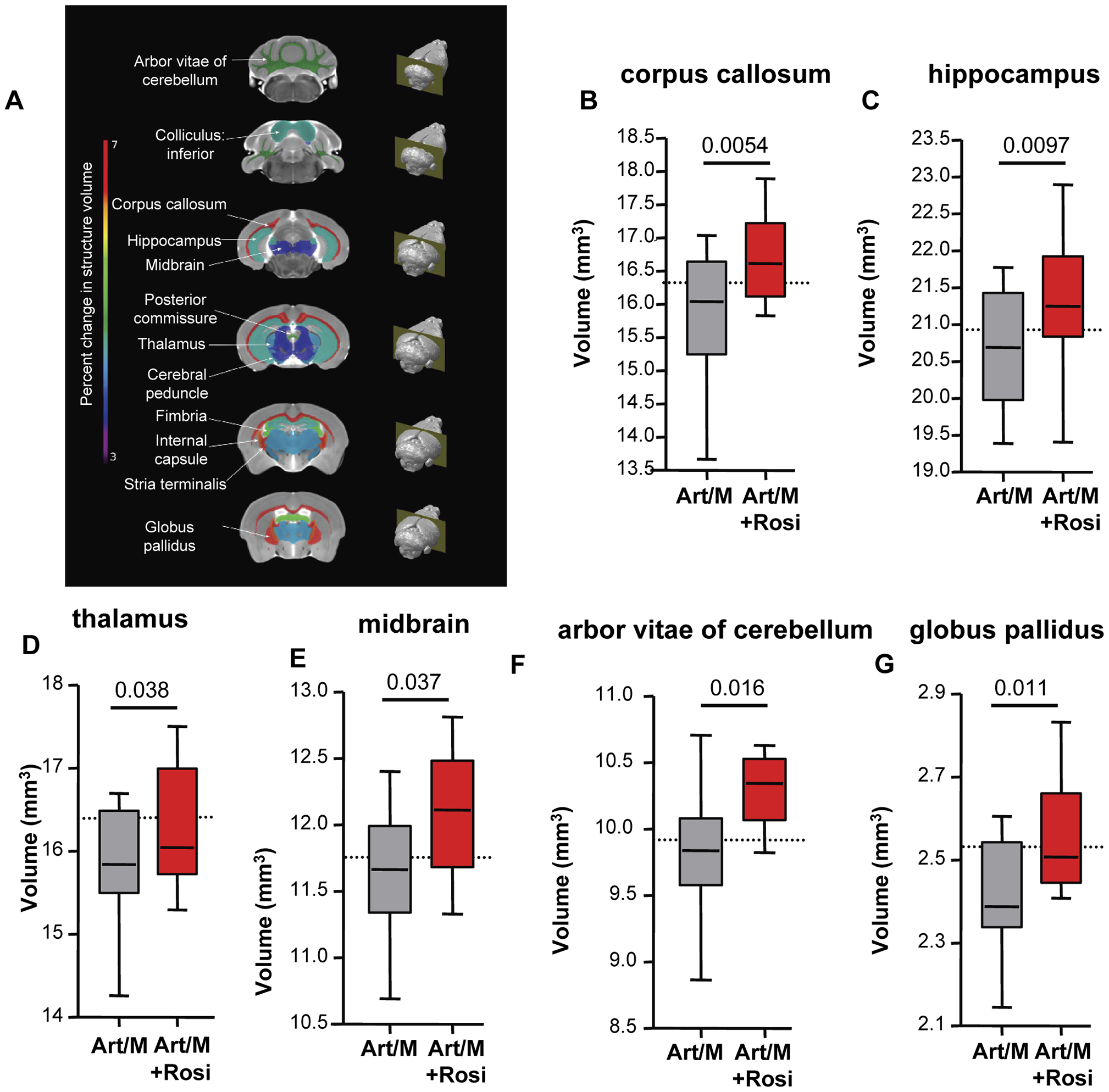 Rosiglitazone adjunctive therapy protects mice from malaria-induced brain atrophy.