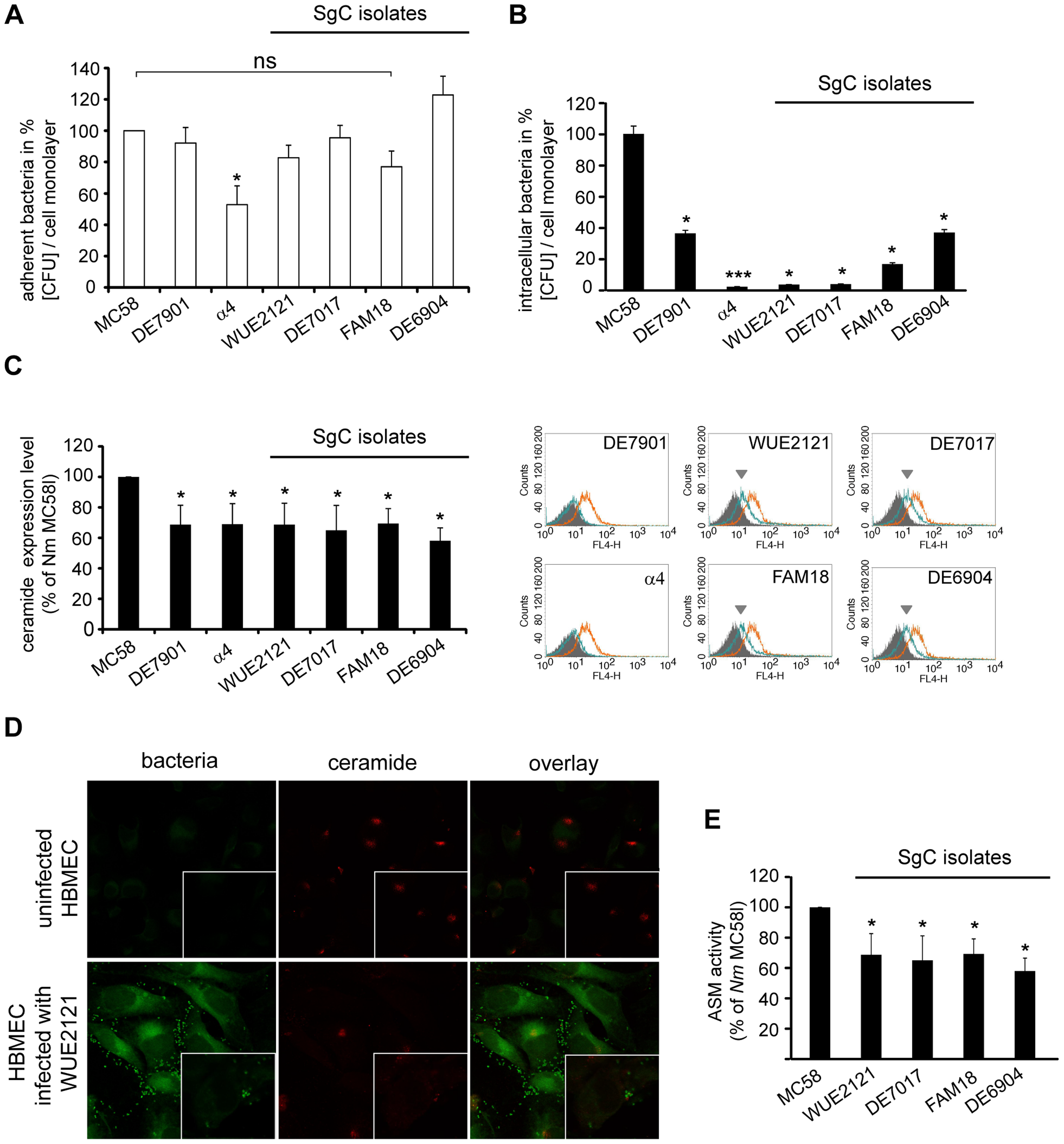 MenC isolates are less efficient at activating ASM and membrane ceramide release on HBMEC.