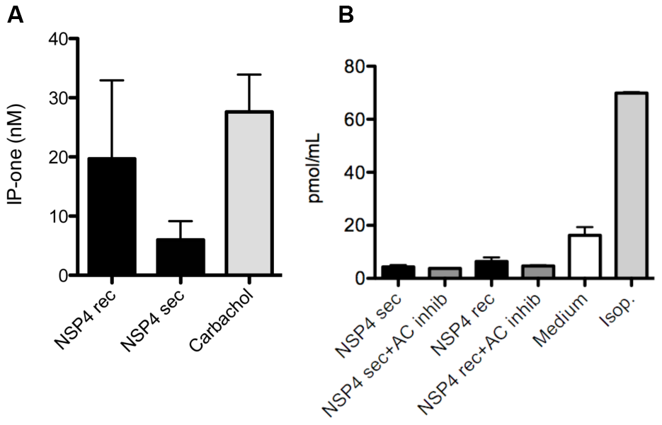 NSP4 activates phospholipase C mediated IP<sub>3</sub> but not the cAMP pathway.