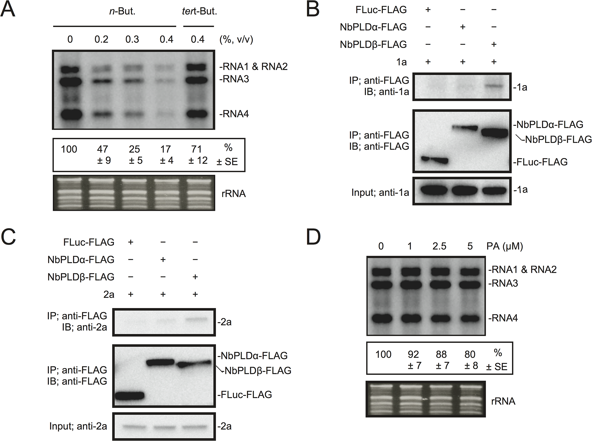 BMV RNA replication requires PLD-derived PA in <i>N</i>. <i>benthamiana</i> protoplasts.