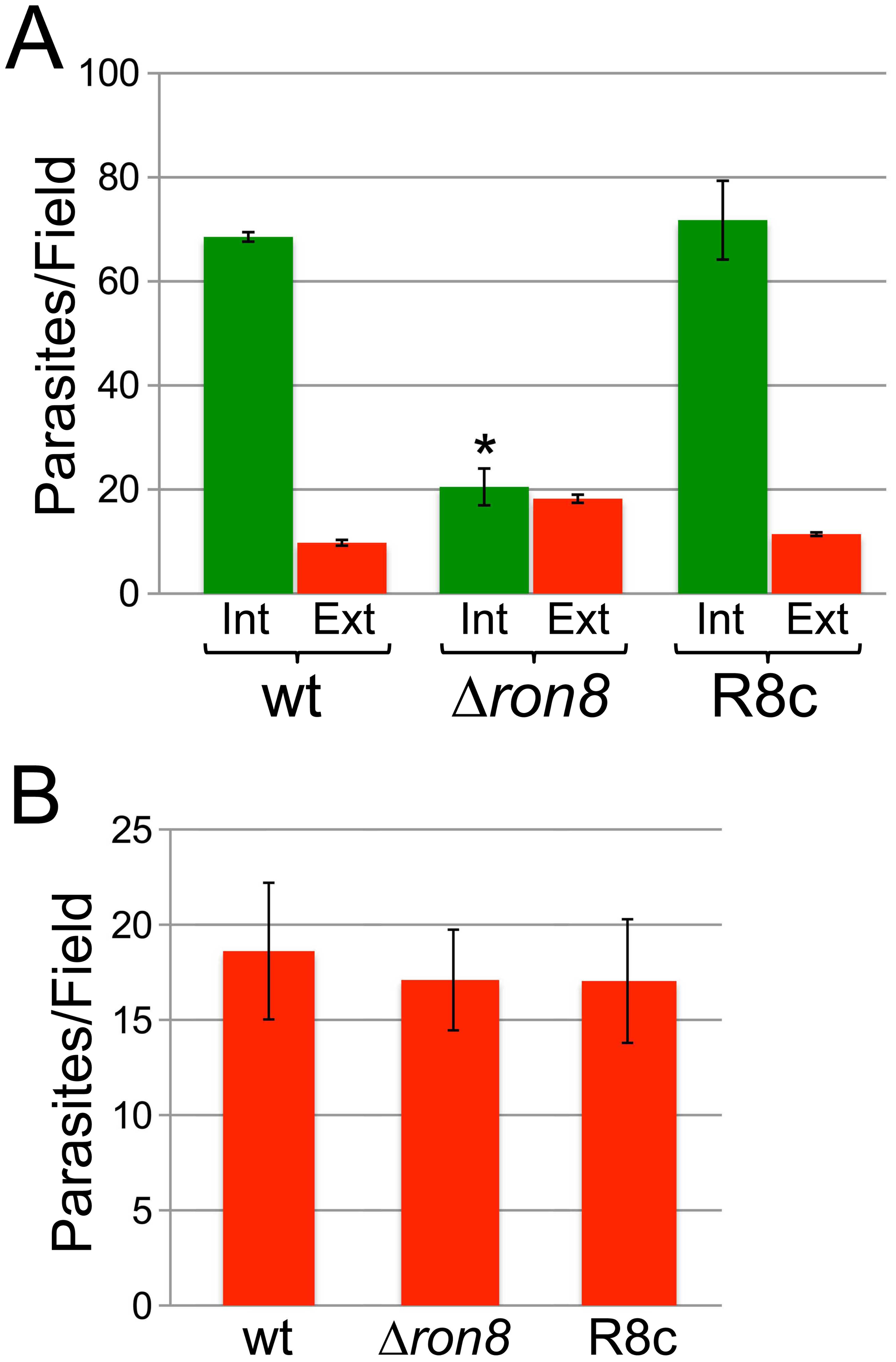 Parasites lacking RON8 are deficient in invasion likely through increased detachment from host cells.