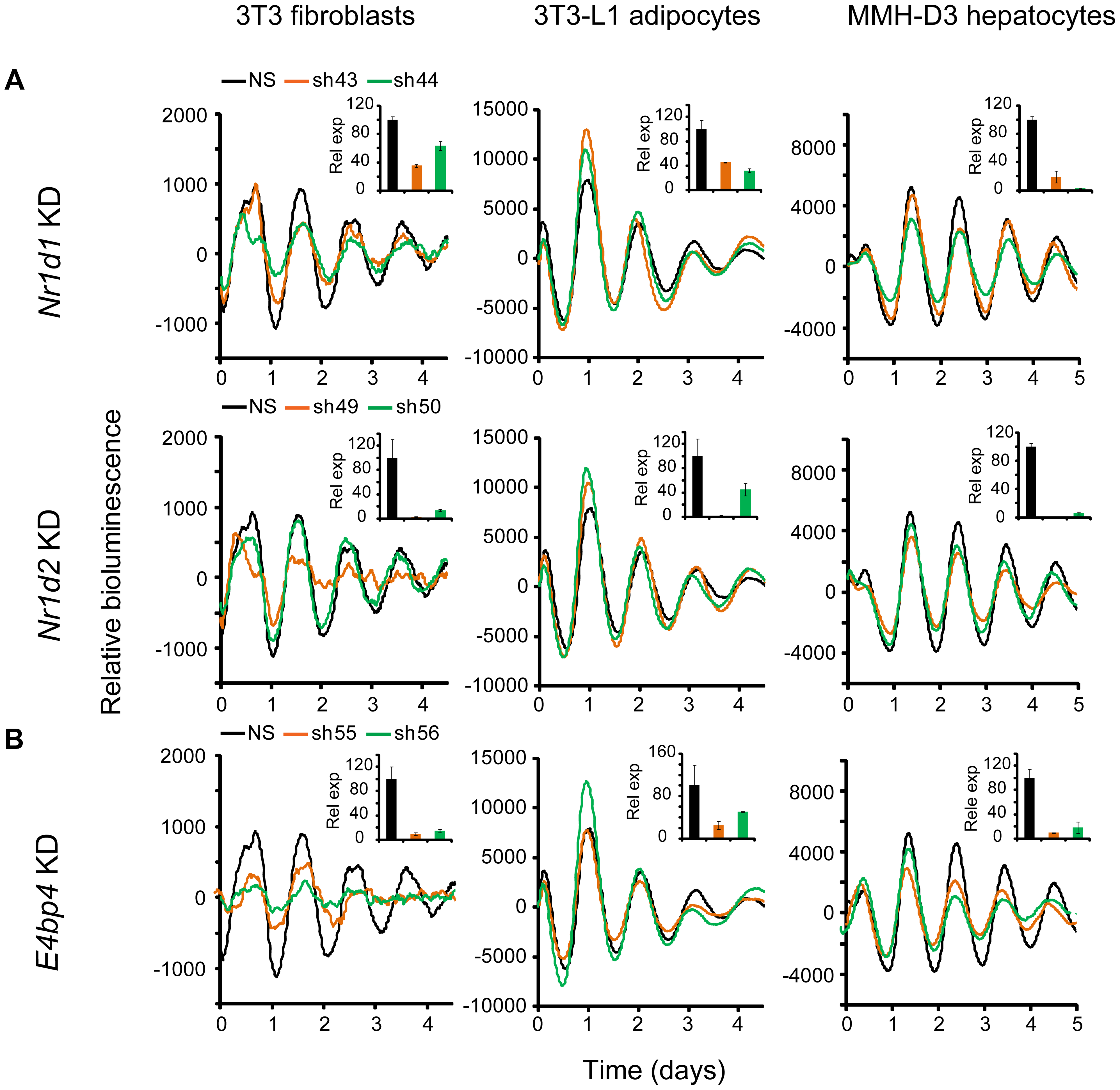 Knockdowns of <i>Nr1d1</i>, <i>Nr1d2</i>, and <i>E4bp4</i> lead to cell type-specific circadian phenotypes.