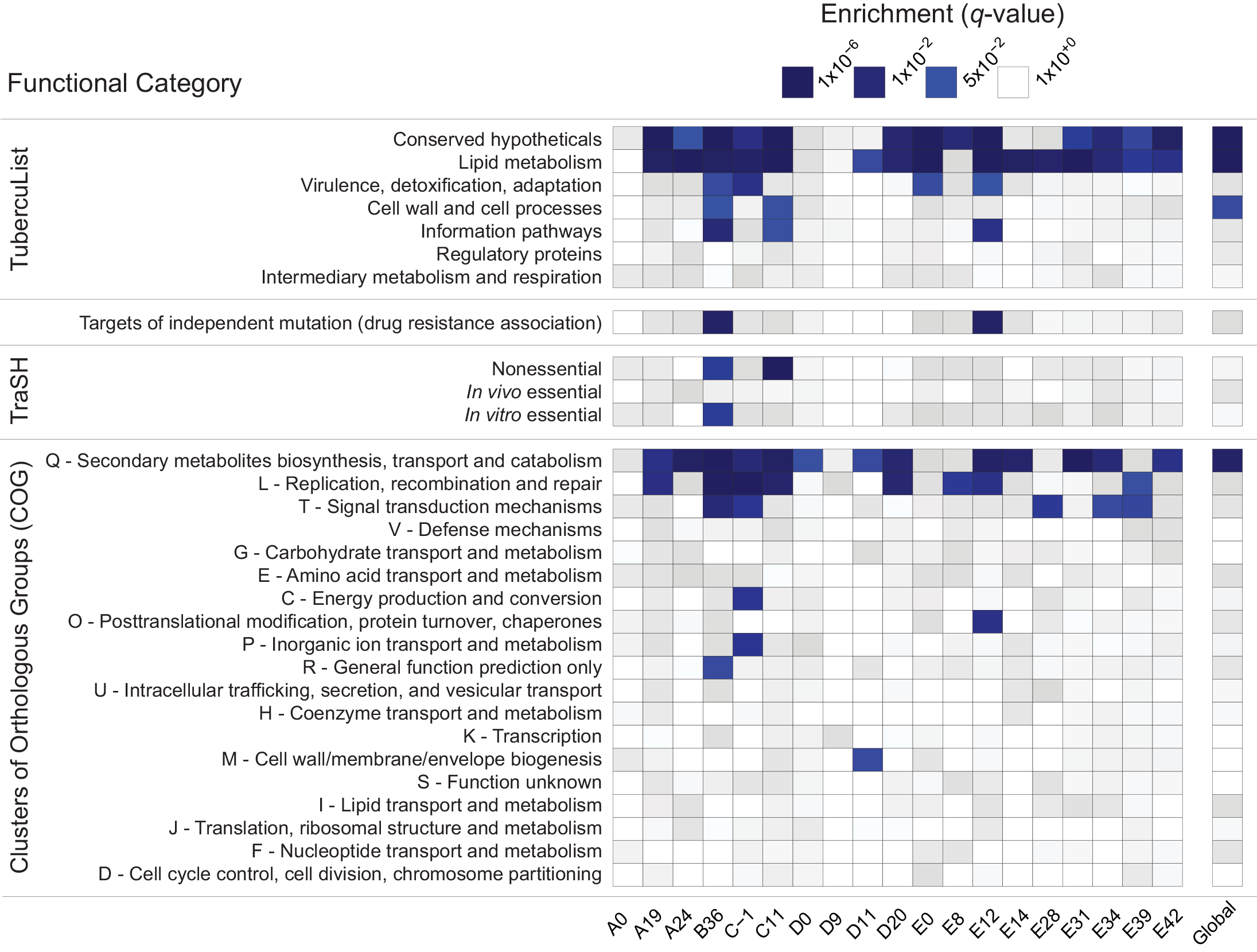 Enrichment of annotation categories among genes with extreme negative values of Tajima's D (TD).