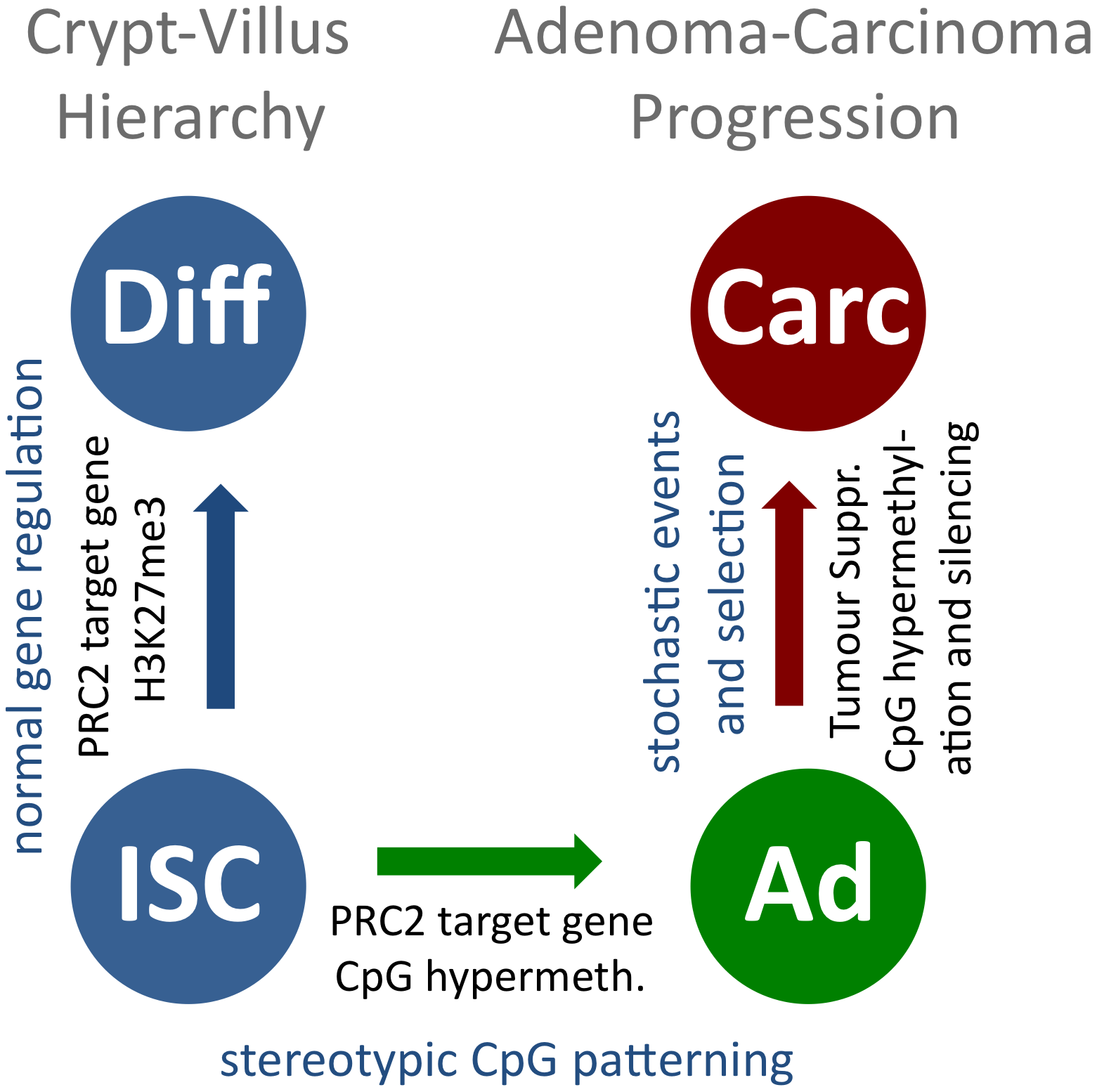 A model for stepwise formation of cancer cell CpG epigenomes.