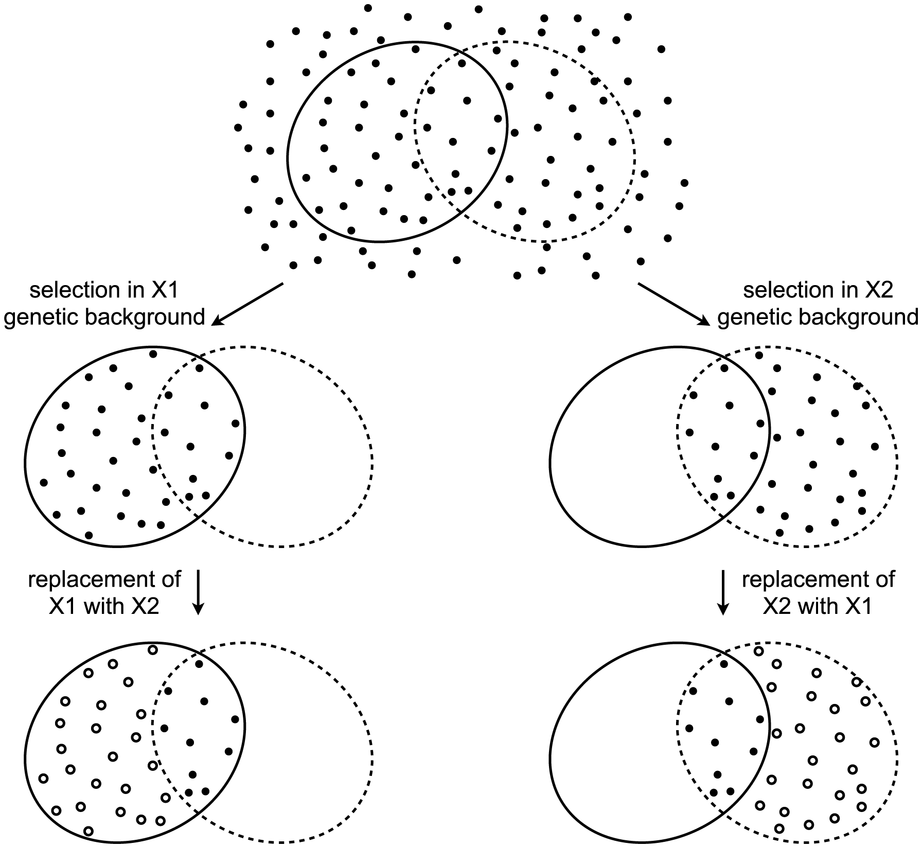 Revelation of cryptic genetic variation without a change in robustness.
