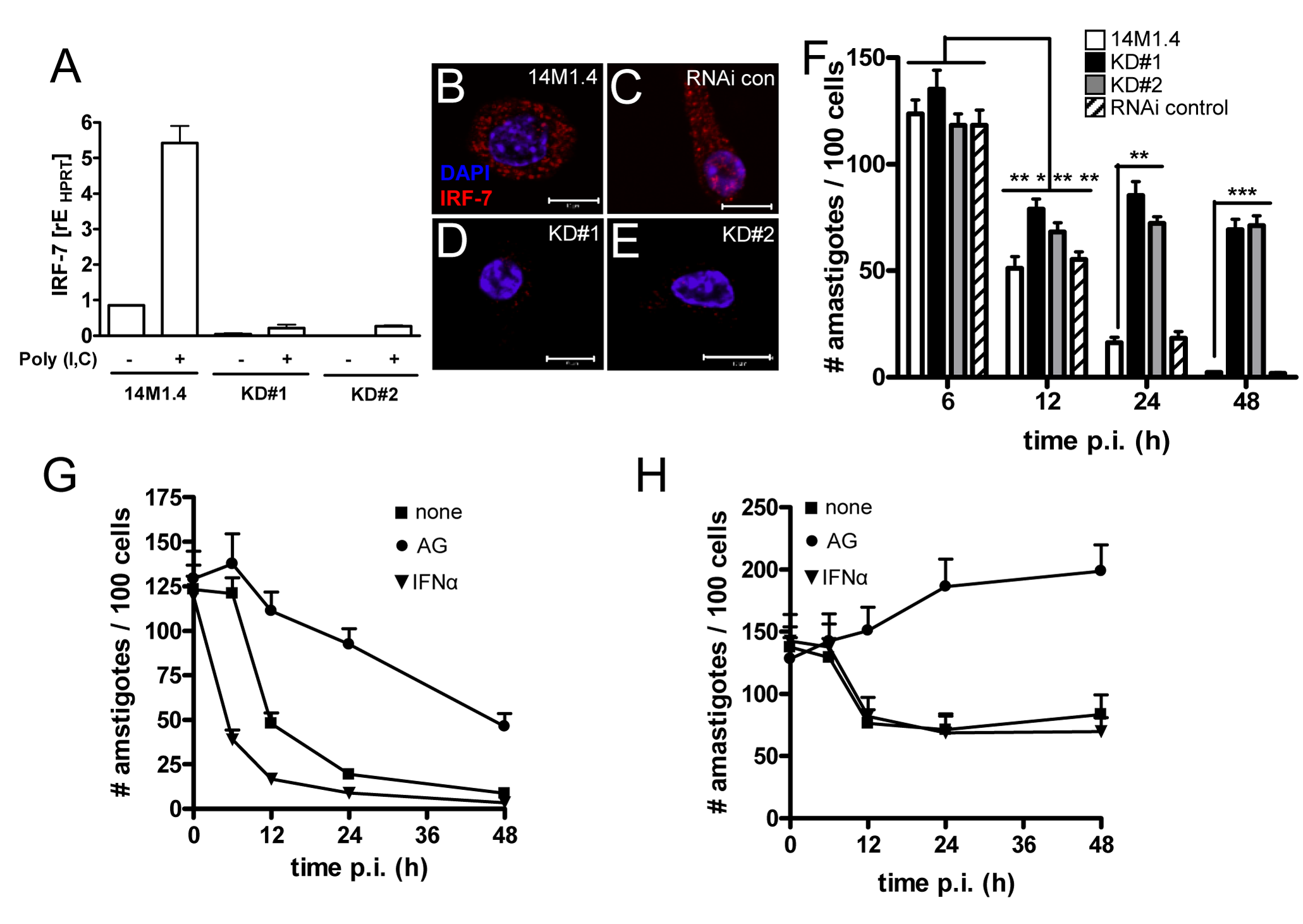 IRF-7-dependent killing of <i>Leishmania</i> in 14M1.4 cells.