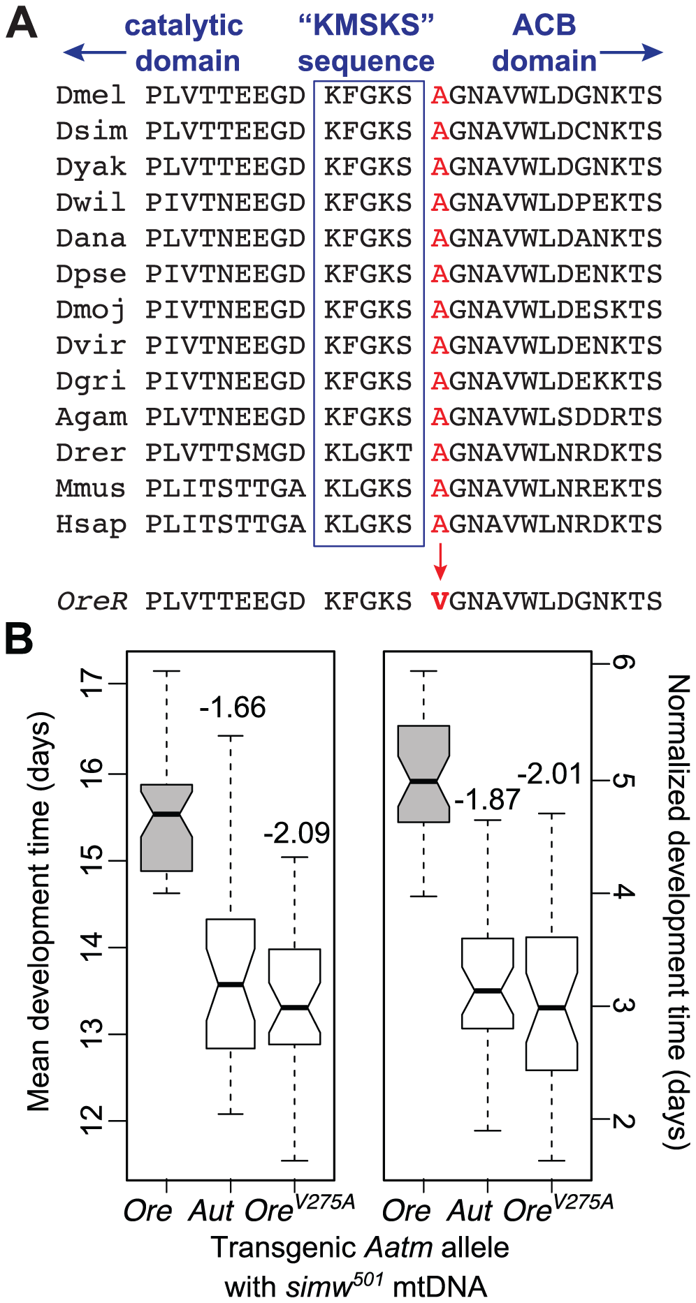 An amino acid change in the mt-TyrRS gene <i>Aatm</i> is incompatible with the <i>mt-tRNA<sup>Tyr</sup></i> polymorphism.