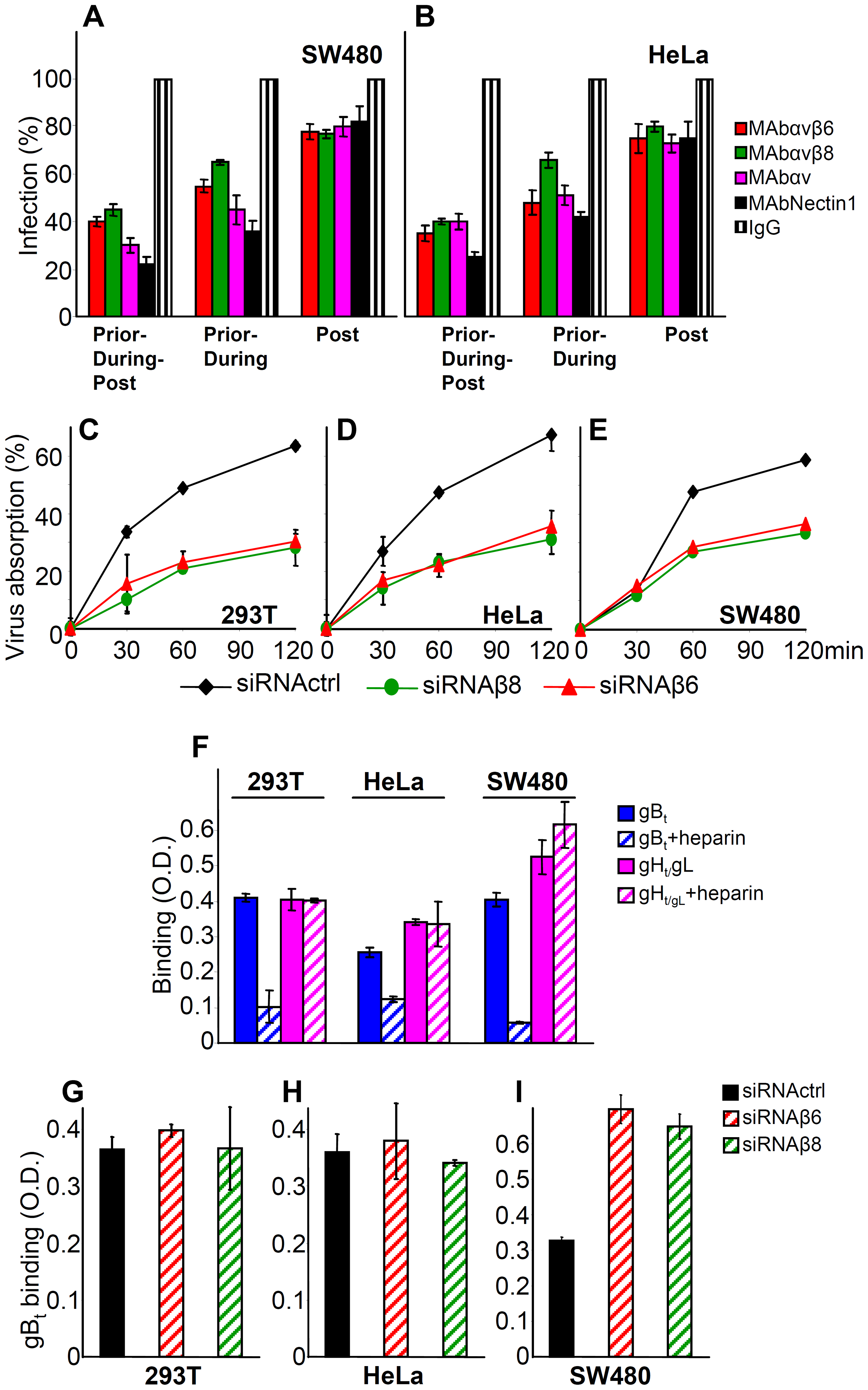 Steps in HSV infection inhibited by function-blocking MAbs to αvβ6- and αvβ8–integrins, or by integrin silencing.