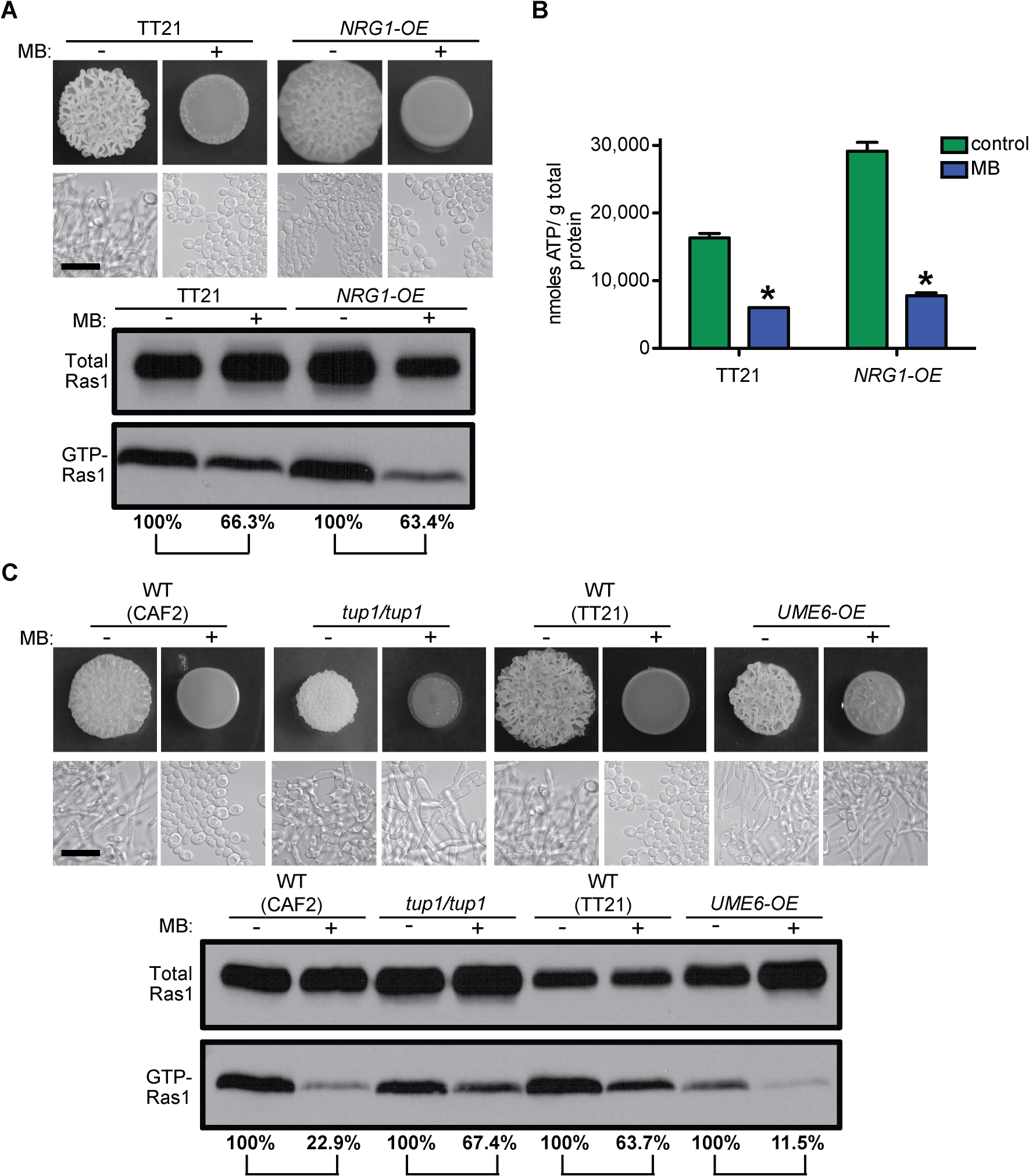 MB effects on Ras1 signaling are independent of the morphological switch and the blockage of other pathways.