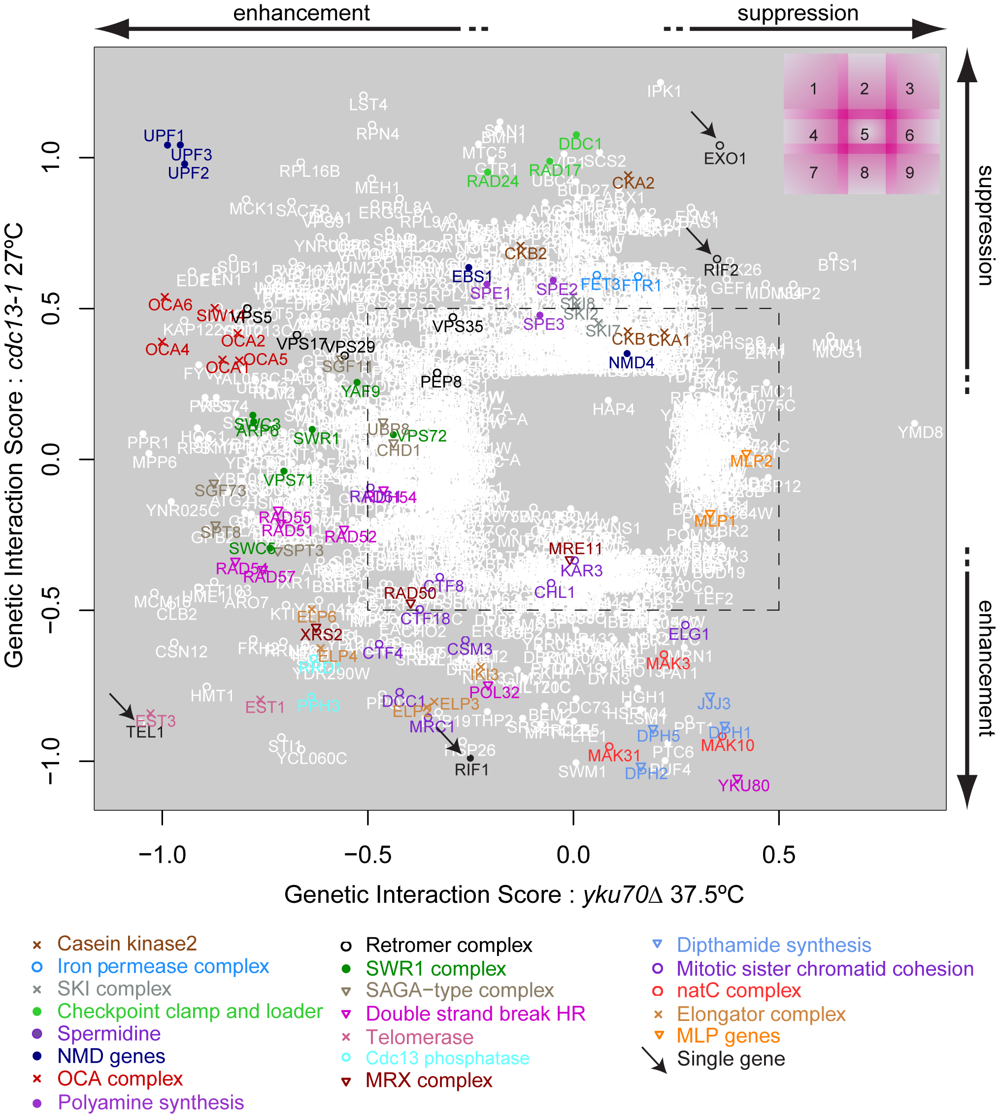 Genetic interaction strength (GIS) comparison between <i>cdc13-1</i> and <i>yku70</i>Δ.