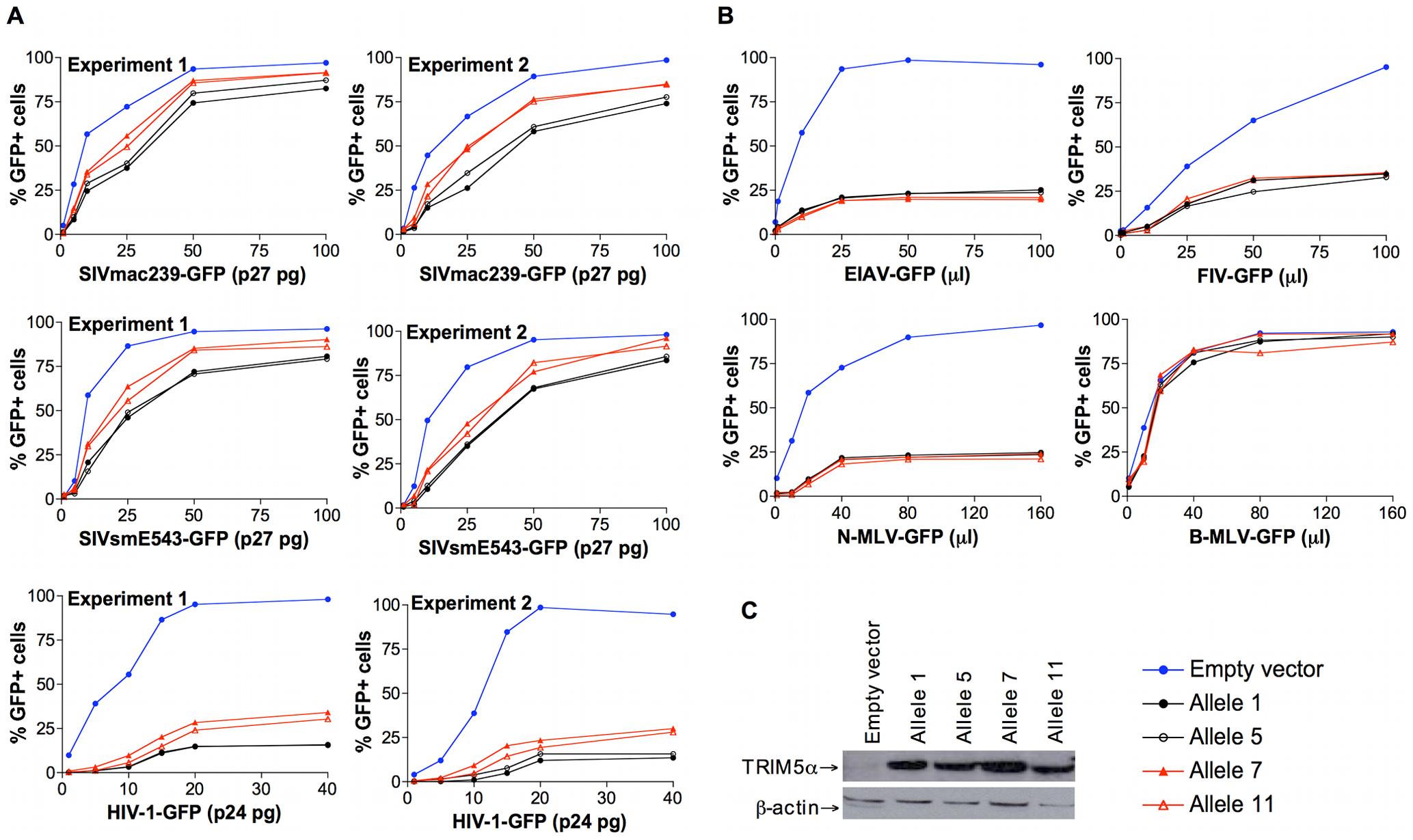 Antiretroviral activity of TRIM5α variants expressed in feline renal fibroblast (CRFK) cells.