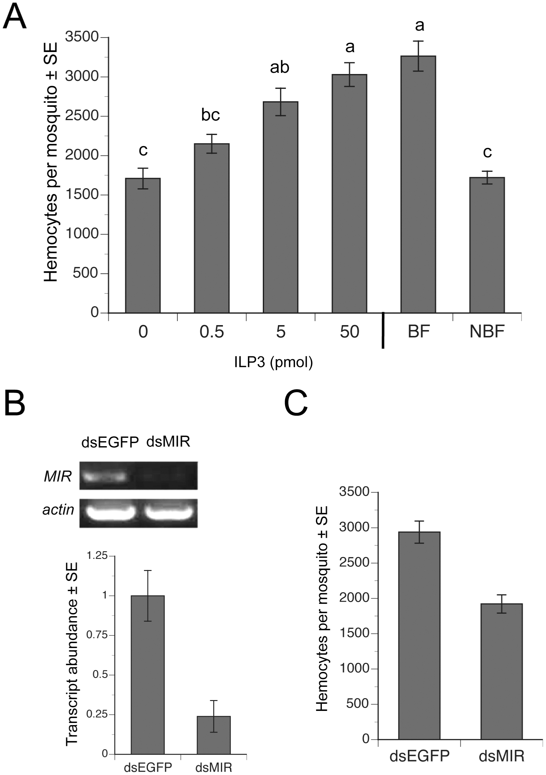 ILP3 dose-dependently rescues hemocyte abundance after decapitation while dsMIR treatment reduces hemocyte abundance.