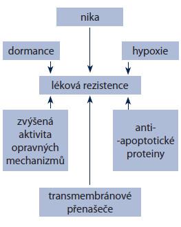Hlavní mechanizmy lékové rezistence nádorových kmenových buněk.