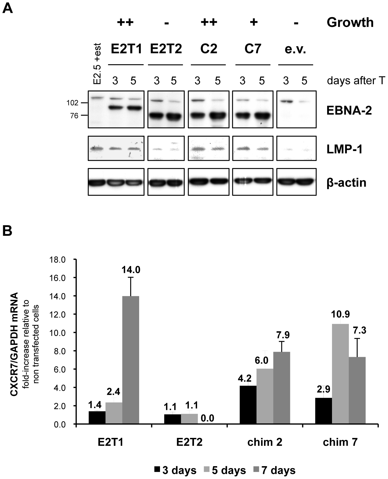 LMP-1 and CXCR7 expression induced by type 1 and type 2 EBNA-2 and chimaeras 2 and 7 correlates with the growth phenotype in the EREB2.5 growth assay.