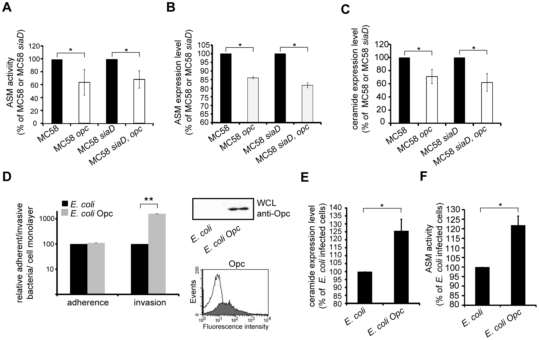 Opc protein contributes to ASM activation and ceramide cell surface release.