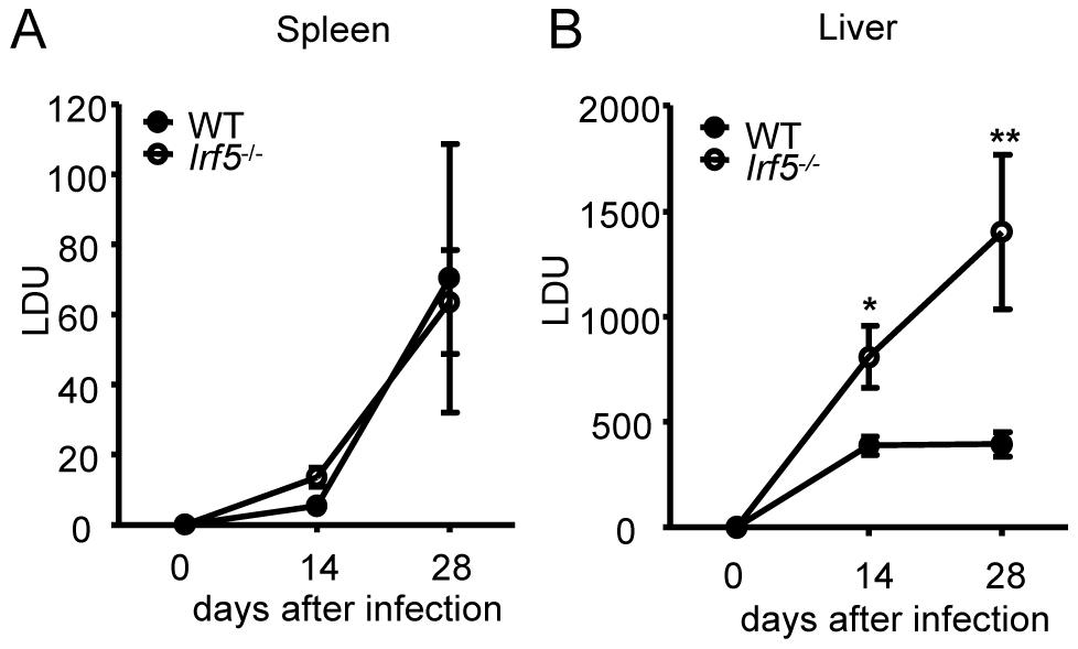 <i>Leishmania donovani</i> infection in <i>Irf5</i><sup>-/-</sup> mice.