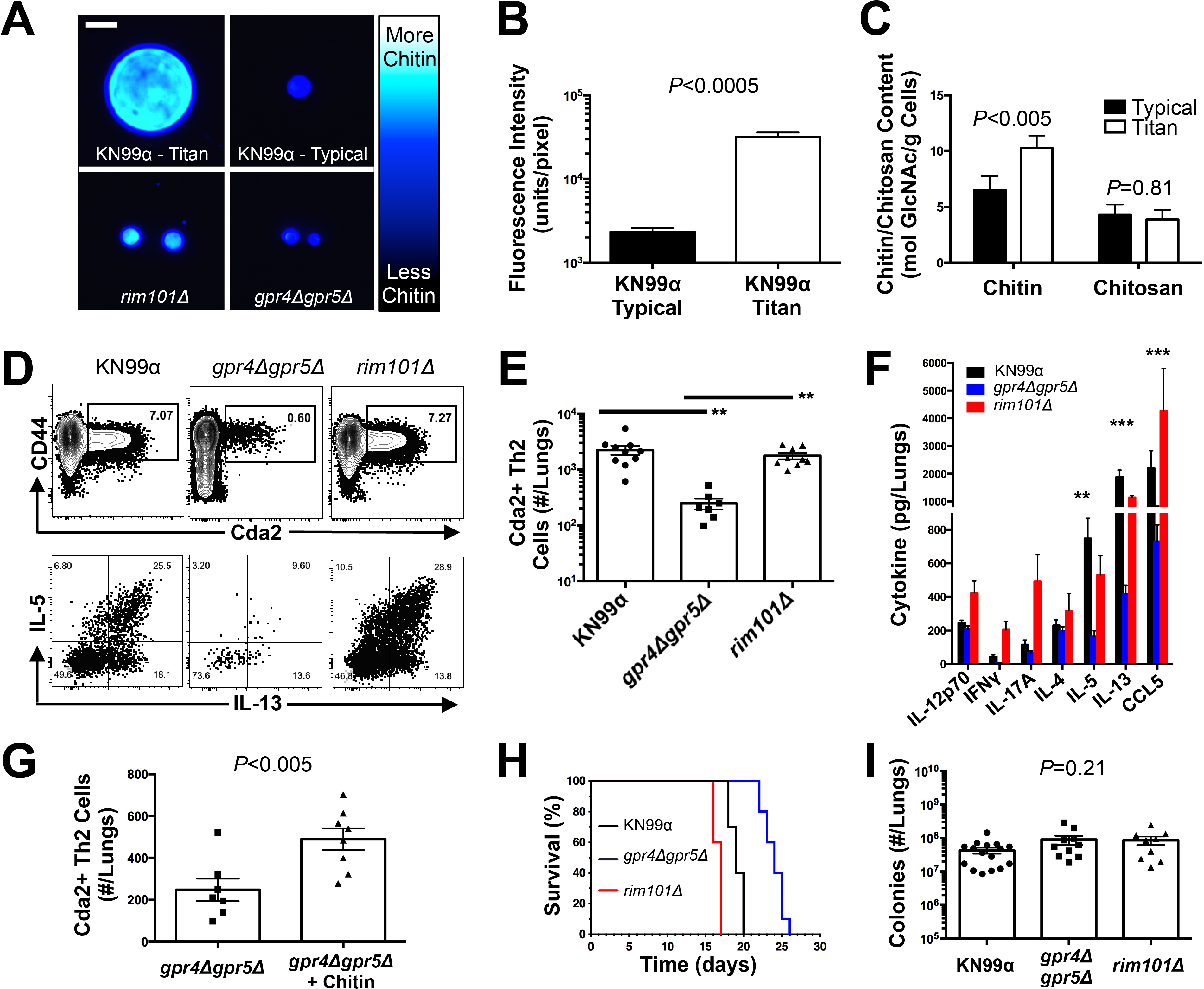 <i>C</i>. <i>neoformans</i> Chitin Correlates with Type-2 Helper T Cell Response and Subsequent Disease.