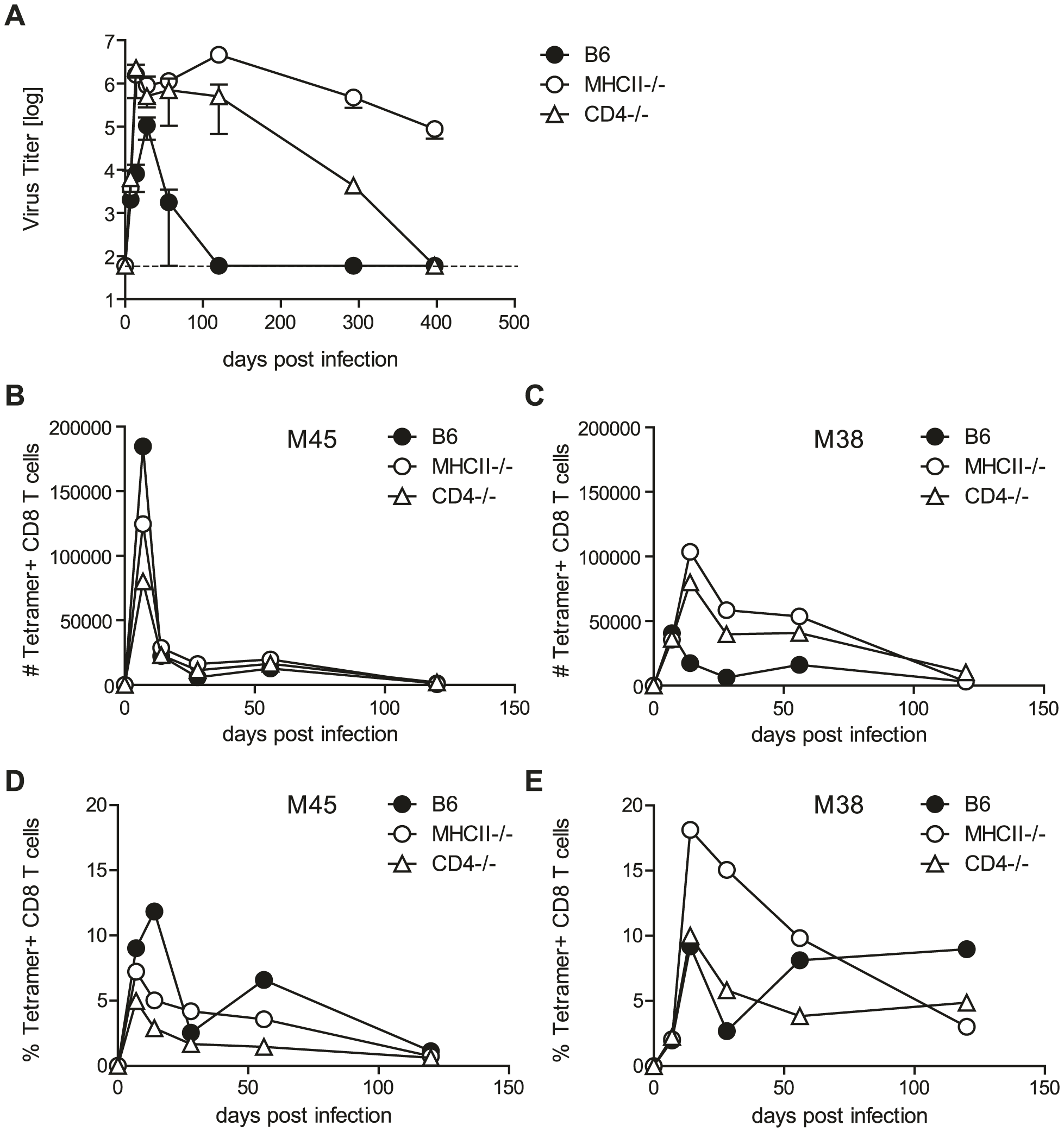 Helper functions exerted by CD4 T cells are dispensable for MCMV control.