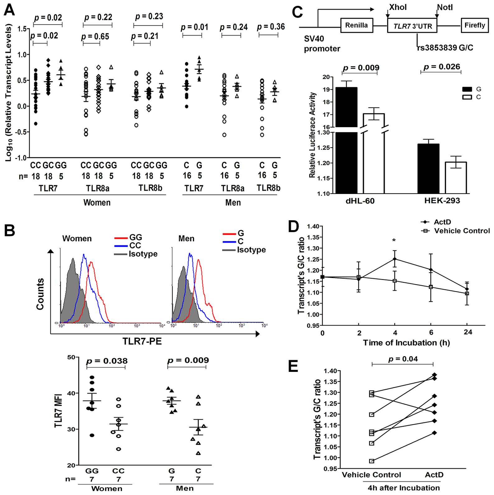 The SLE-risk G allele of rs3853839 confers elevated TLR7 expression through slower mRNA degradation.