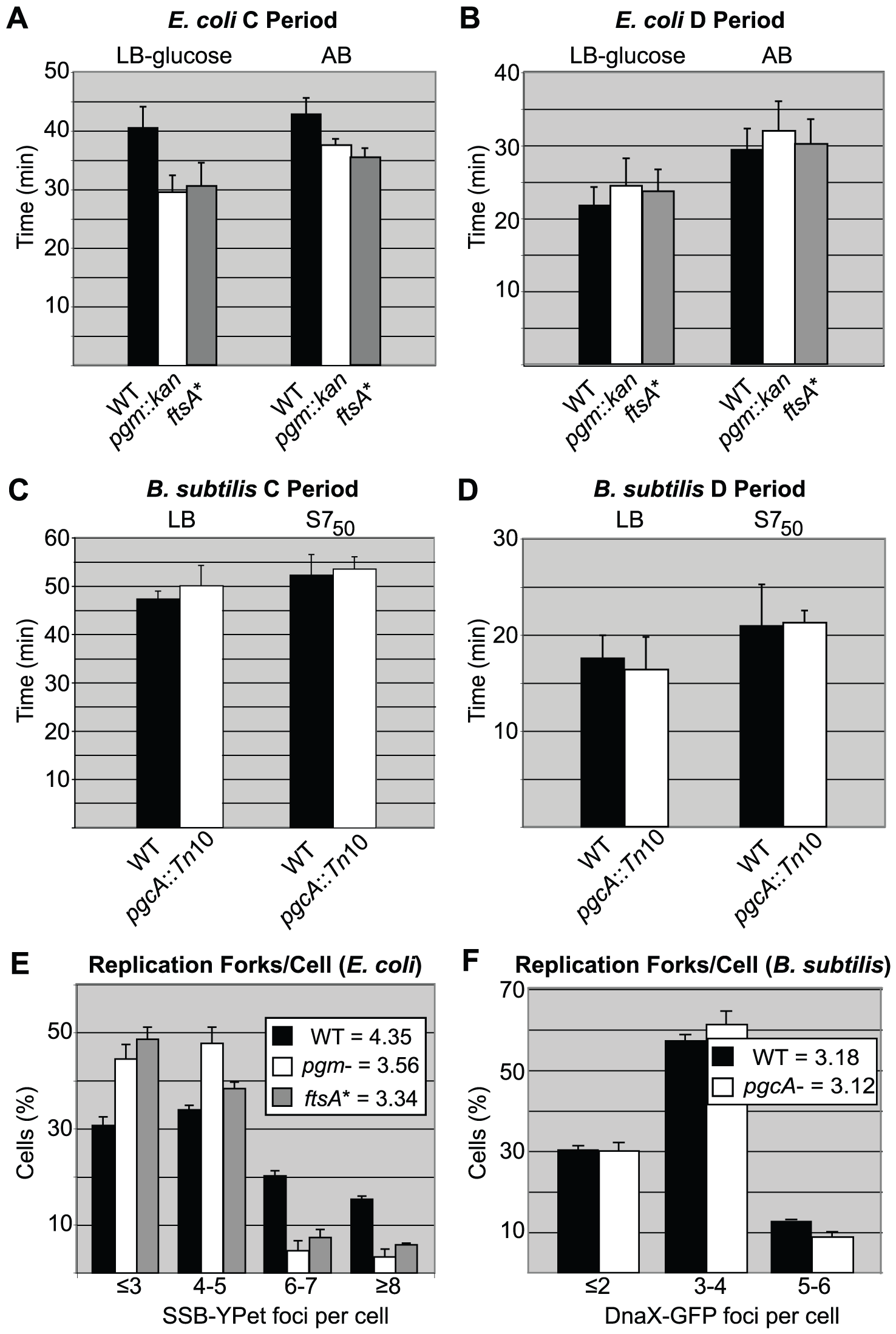 Replication rate is increased in short <i>E. coli</i> cells.
