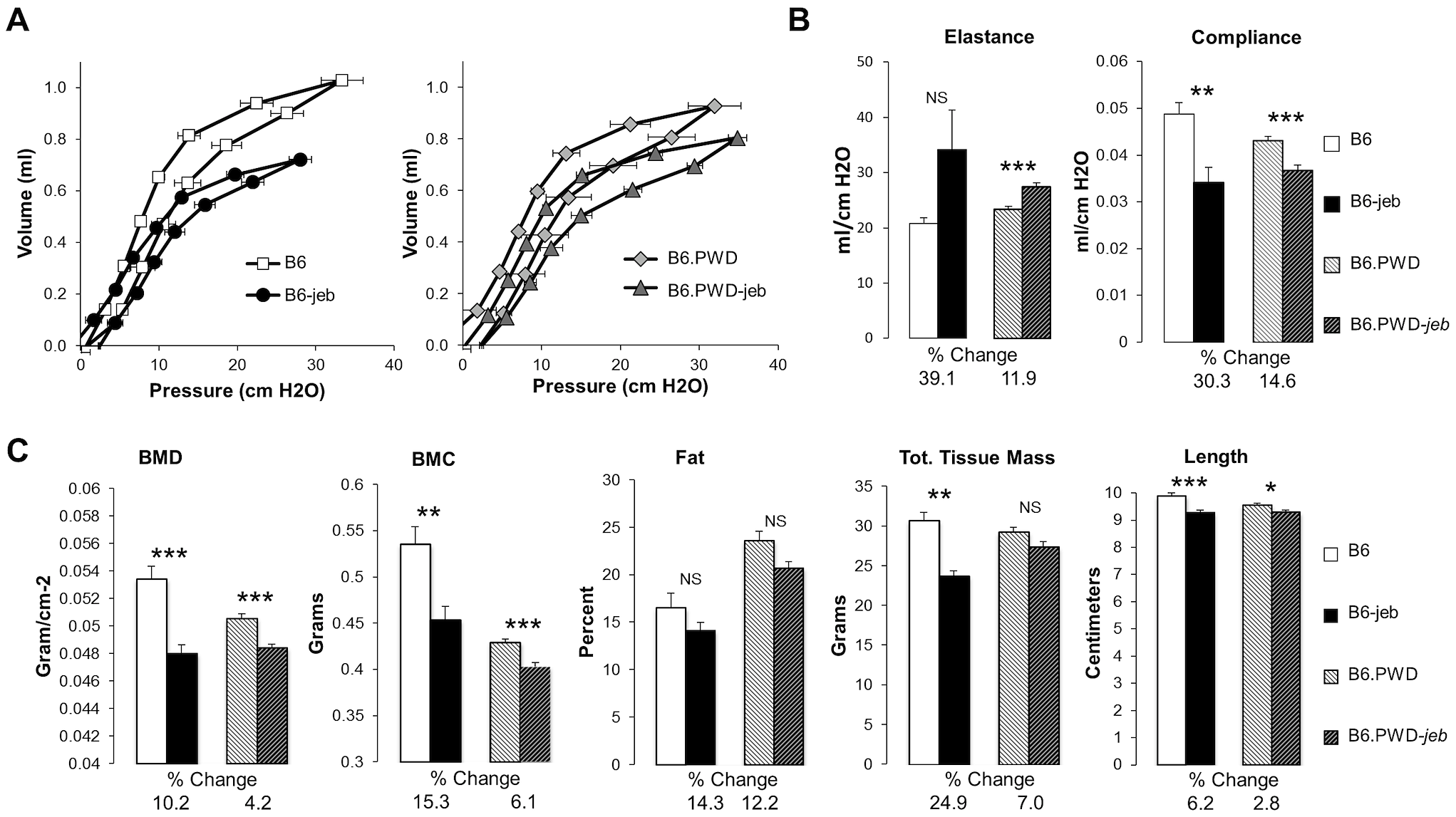 The PWD chr19 reduces respiratory and bone abnormalities of <i>Lamc2<sup>jeb/jeb</sup></i> mice.