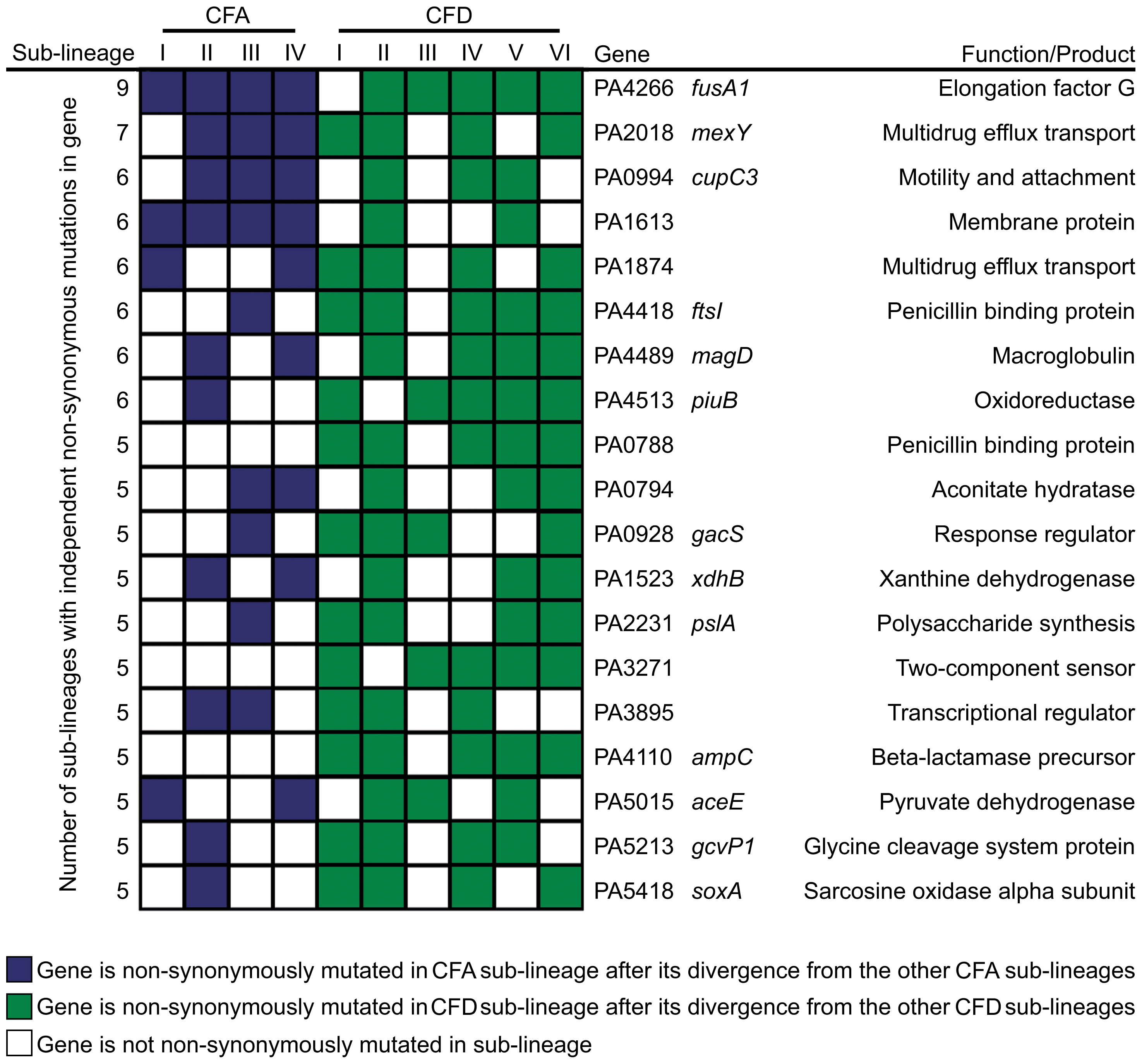 Pathoadaptive genes convergently mutated in CFA and CFD sub-lineages.